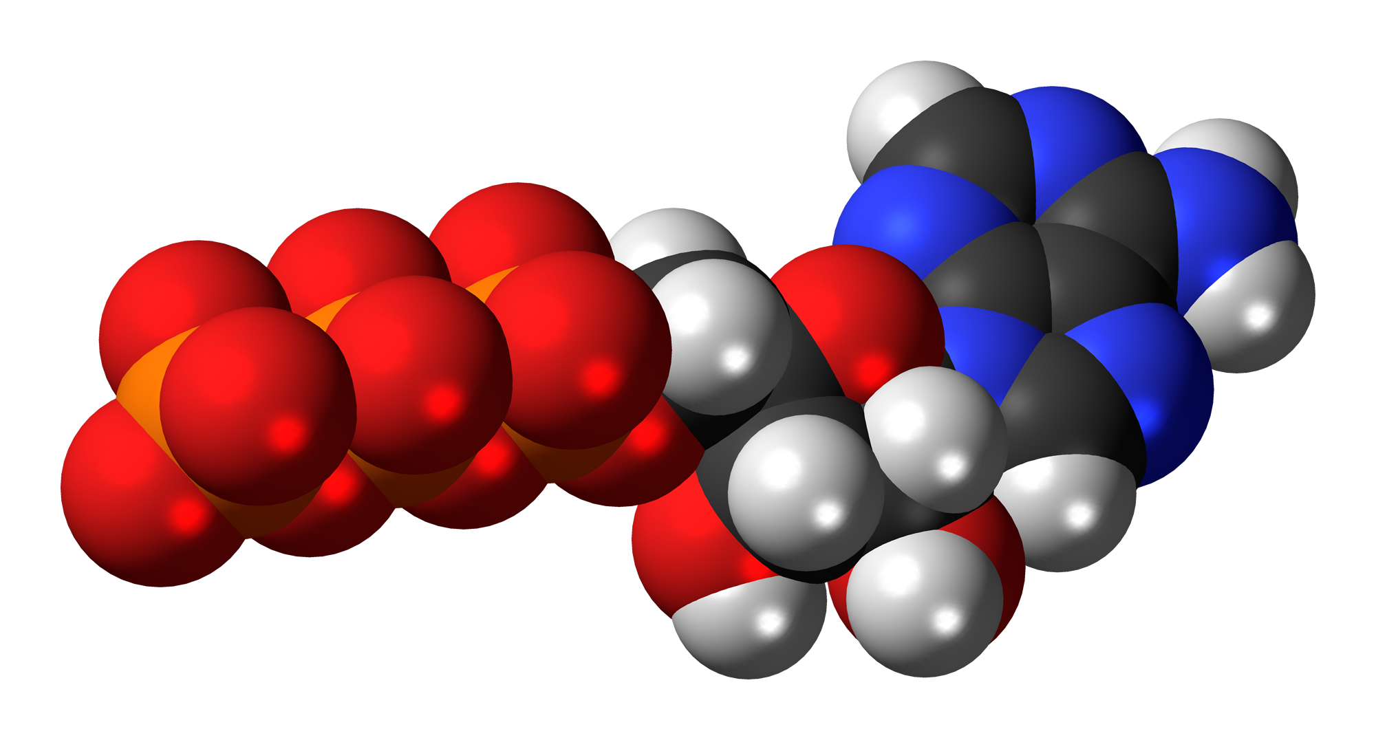 File:Adenosine-triphosphate-anion-3D-spacefill.png ...