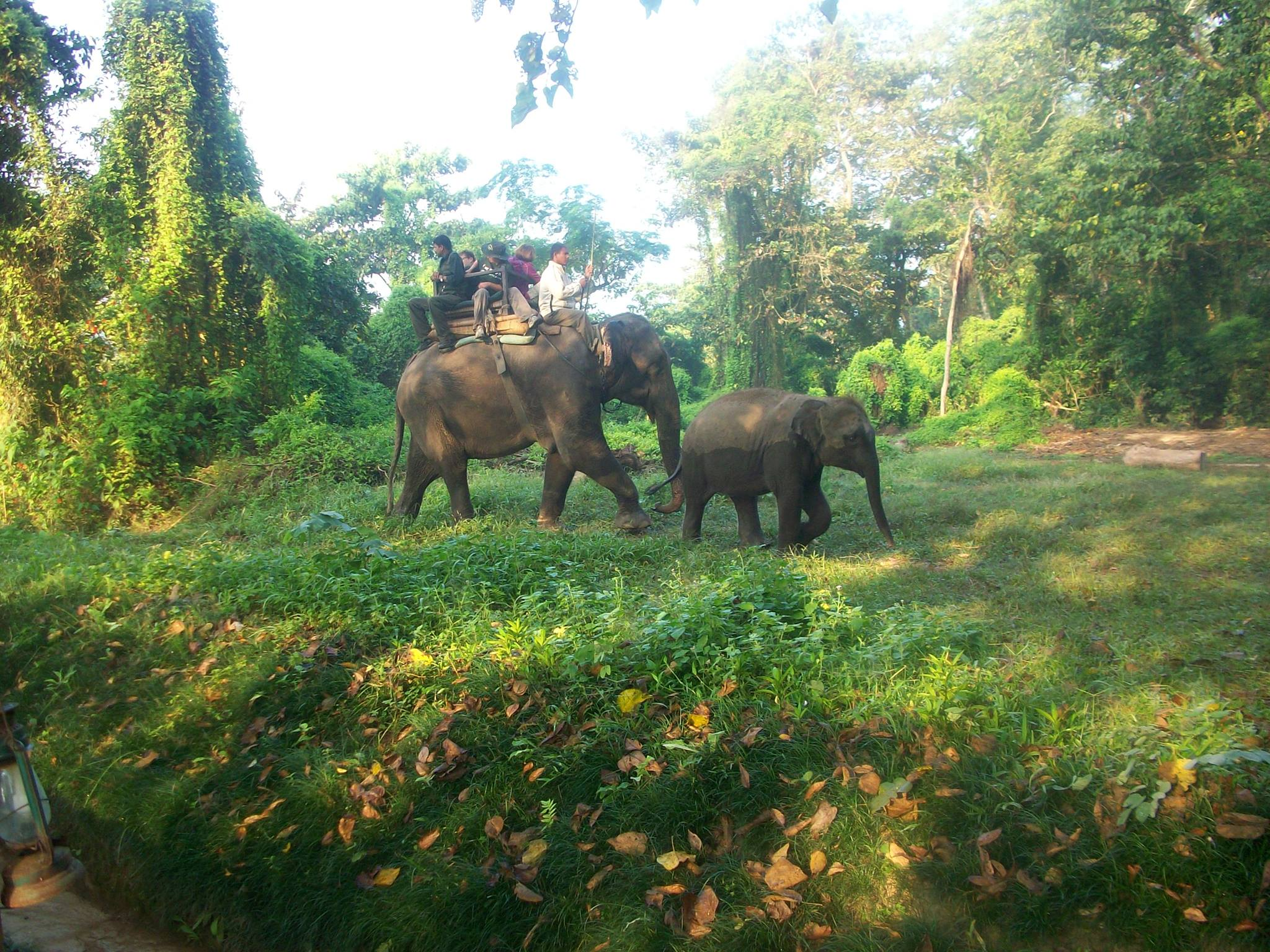 File:Asian Elephant Safari in Chitwan National Park, Chitwan, Nepal