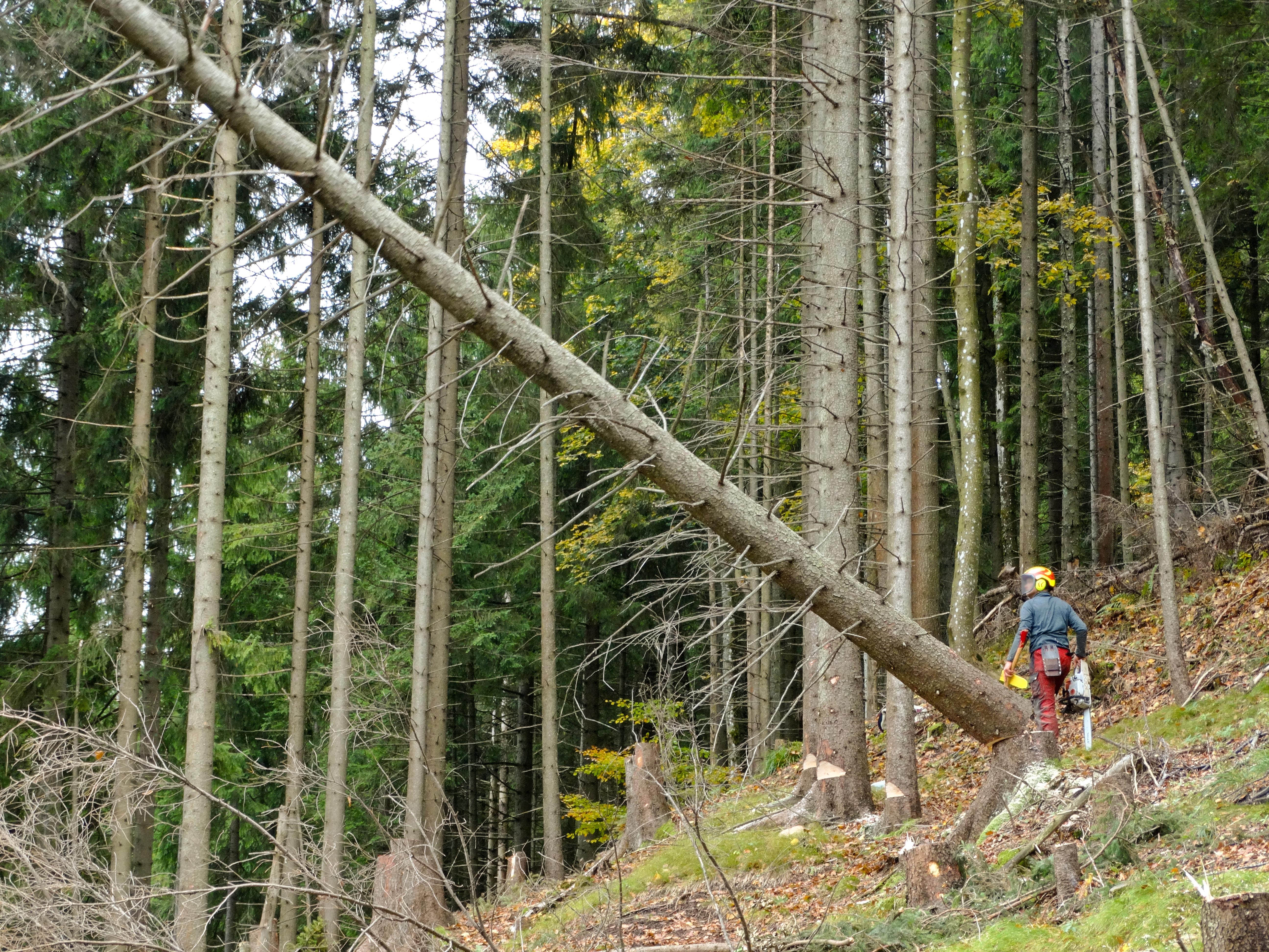 Forstwirtschaft – Wikipedia