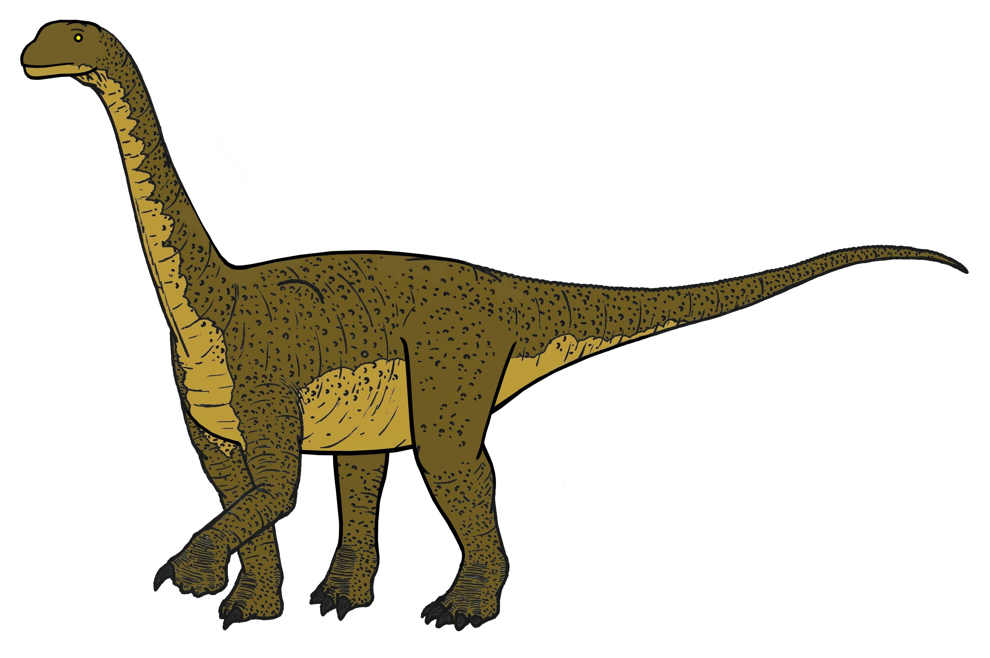 File:Camarasaurus 05874.JPG - Wikipedia, the free encyclopedia