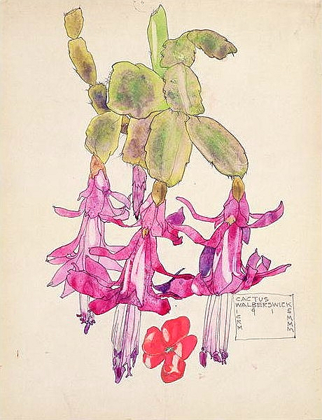 Dessin botanique de cactus de Margaret MacDonald & Charles Mackintosh