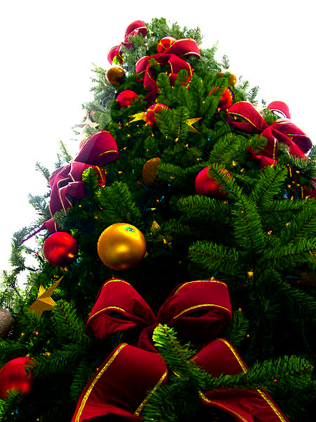http://upload.wikimedia.org/wikipedia/commons/b/b5/Christmas_tree_sxc_hu,_PNG_transparency.png