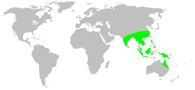 Ficheiro:Distribution.psechridae.1.png