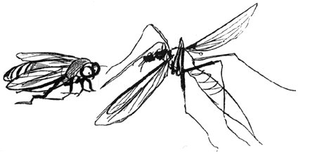 Edward Lear The Daddy Long-Legs and the Fly.jpg