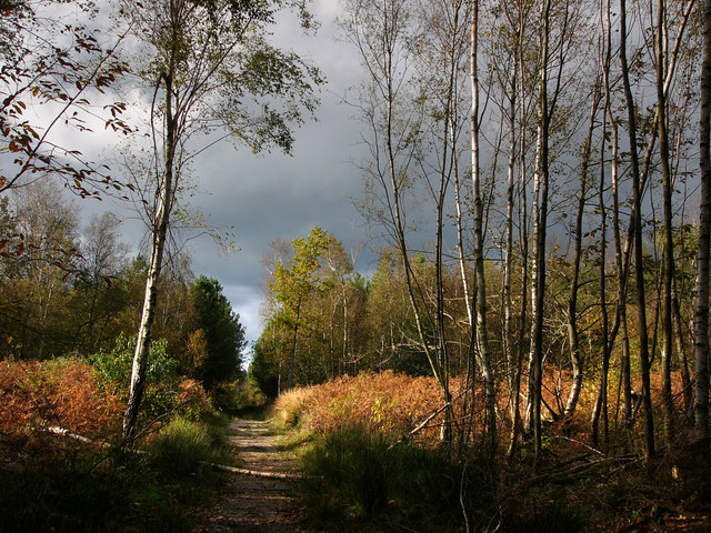 Footpath in Creech Woods - geograph.org.uk - 1025220