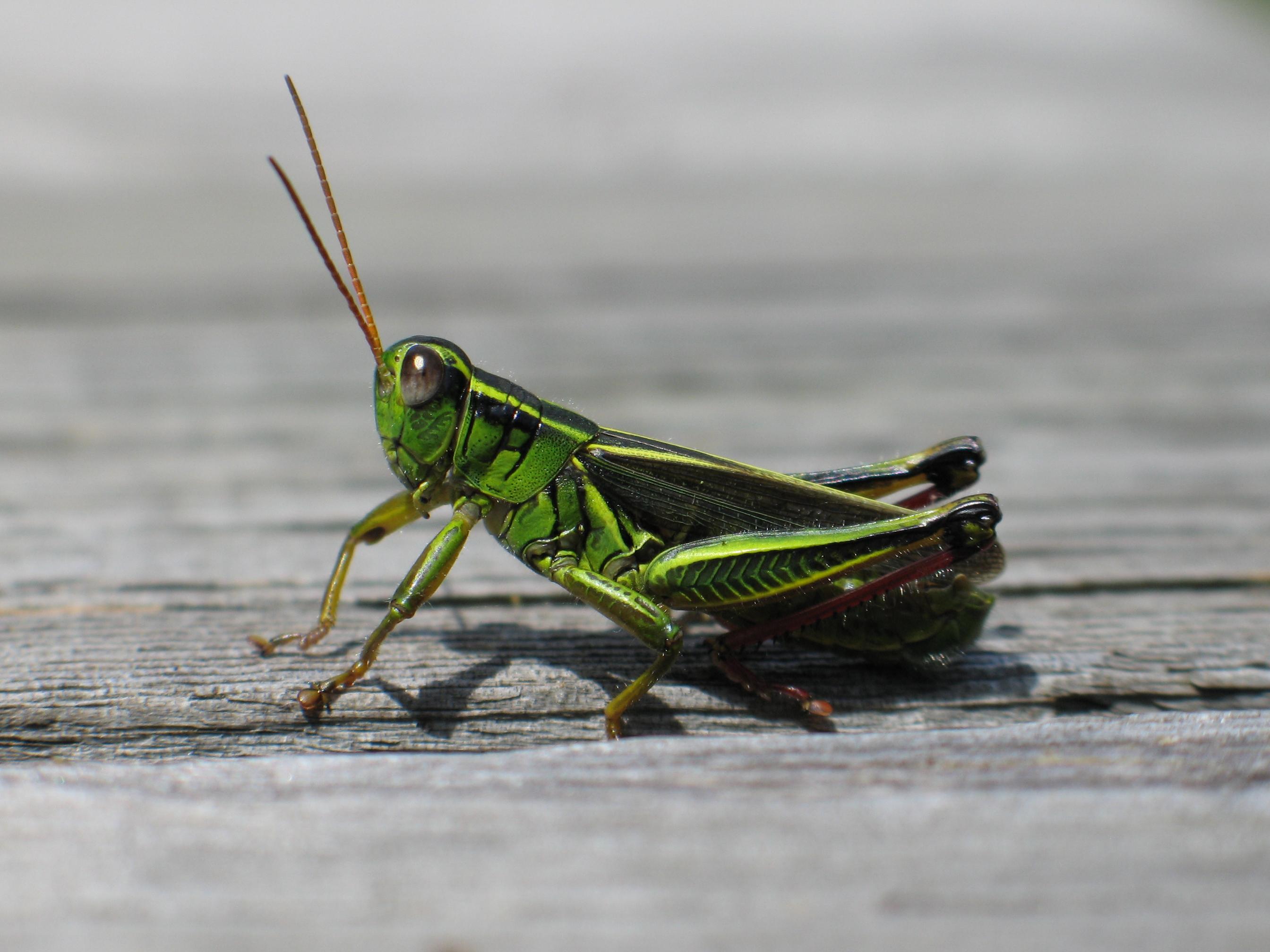 Http Www Grasshopperd Com Forum Topics Grasshopper Wind Simulation In A Room