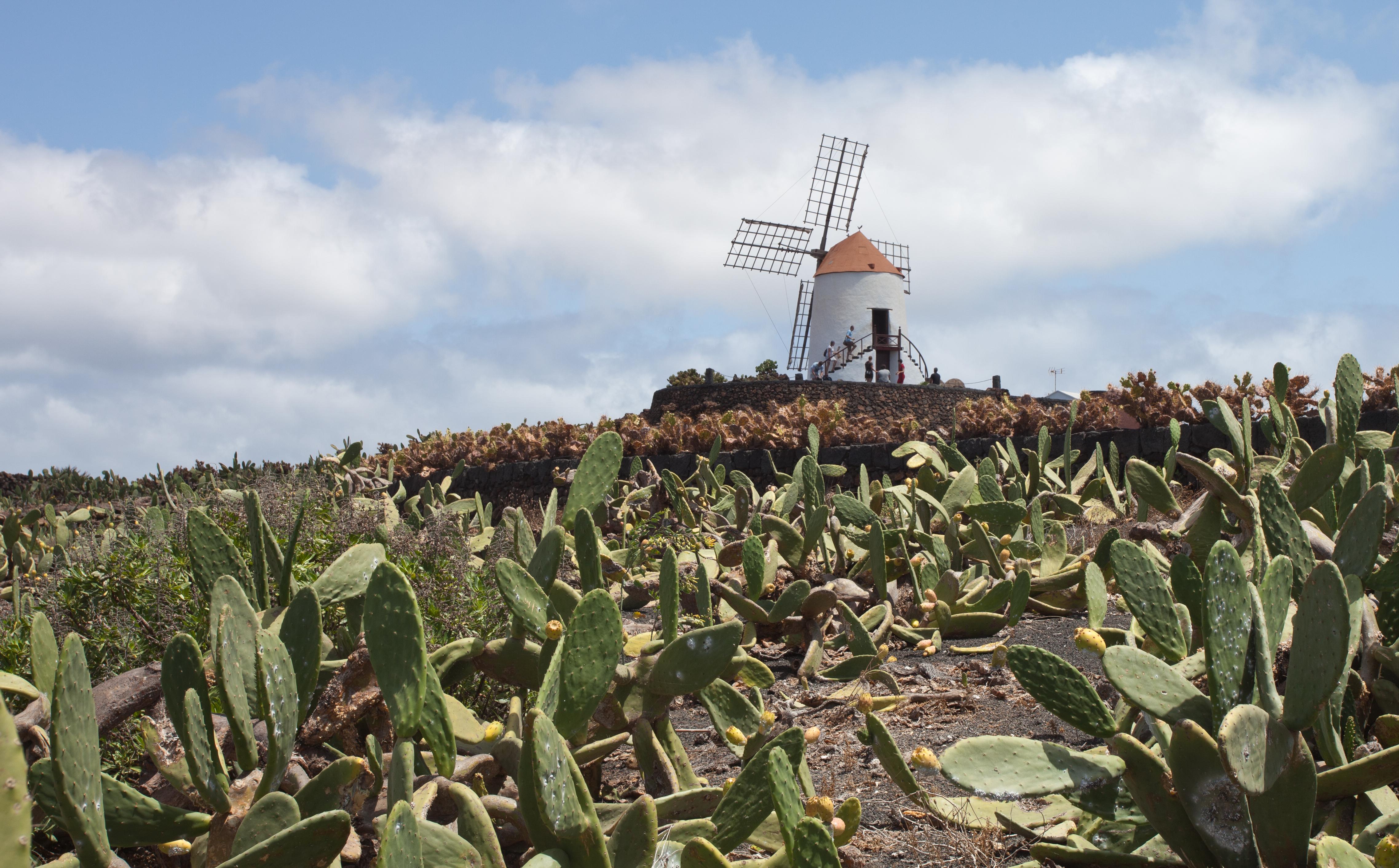 File:Guatiza - Jardín de Cactus - Lanzarote - J46.jpg - Wikimedia Commons