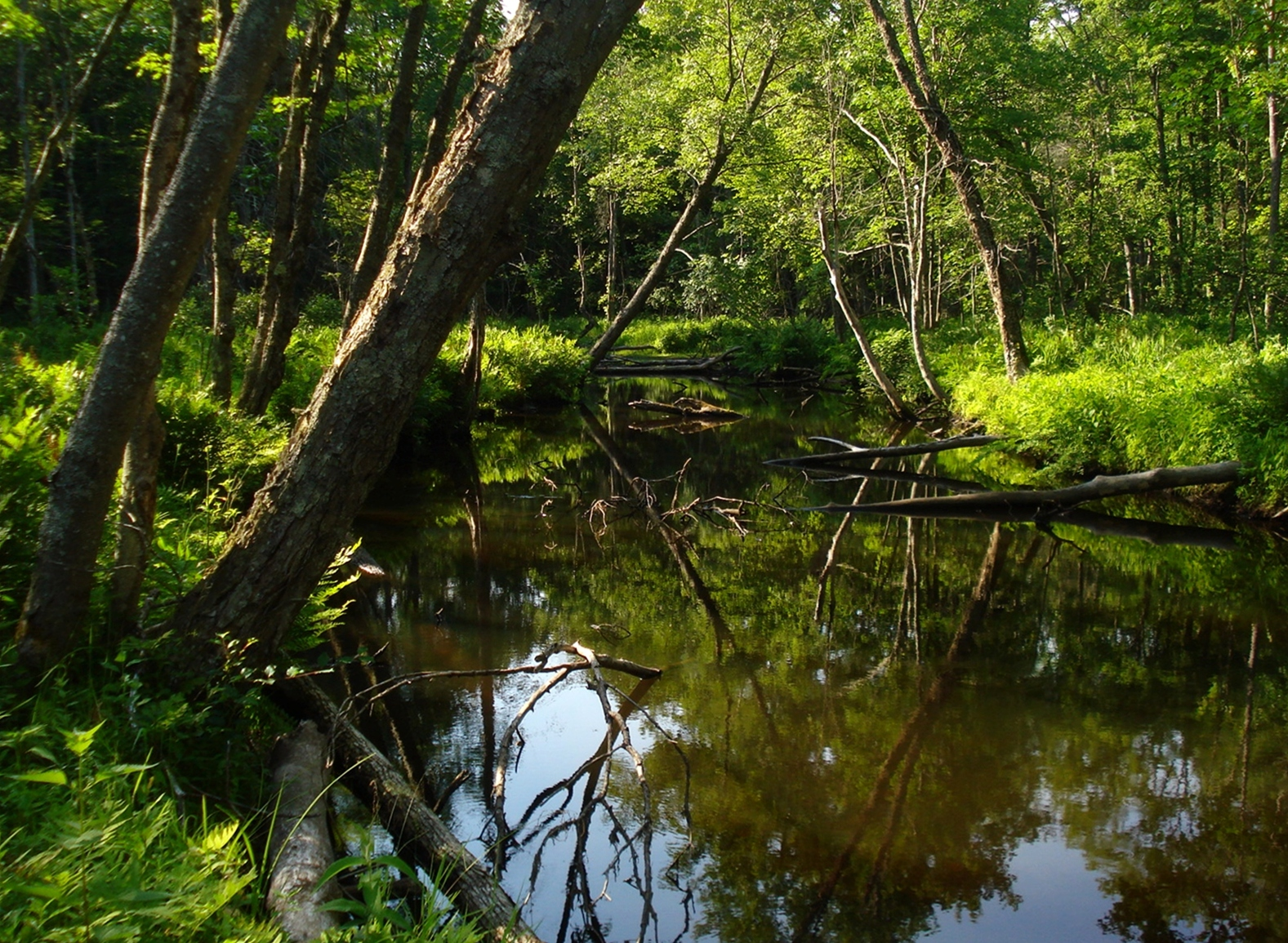 New york state wildlife management areas wikipedia for Nysdec fishing regulations