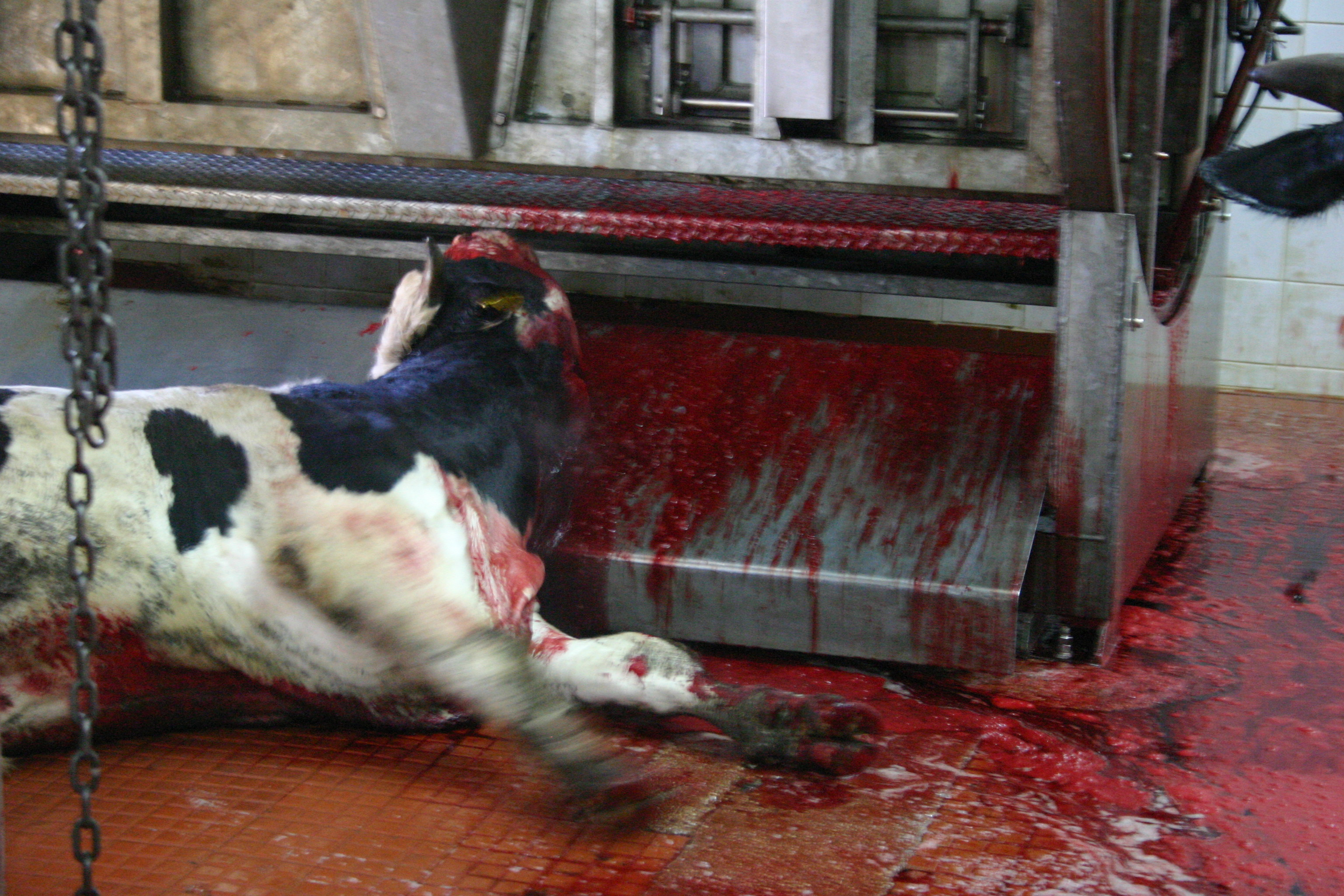 Image result for slaughterhouse