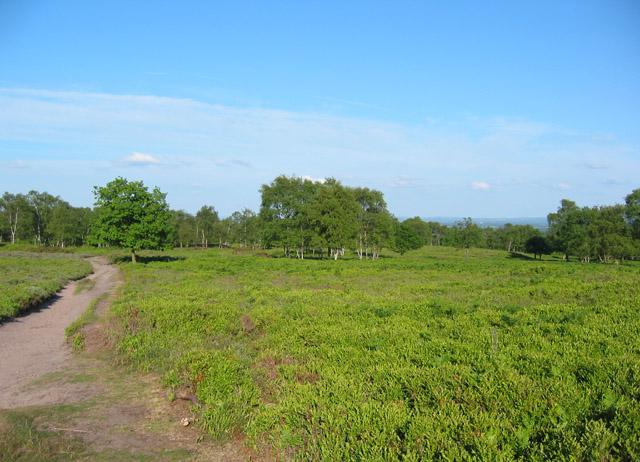 Lowland heath on Bickerton Hill - geograph.org.uk - 184890