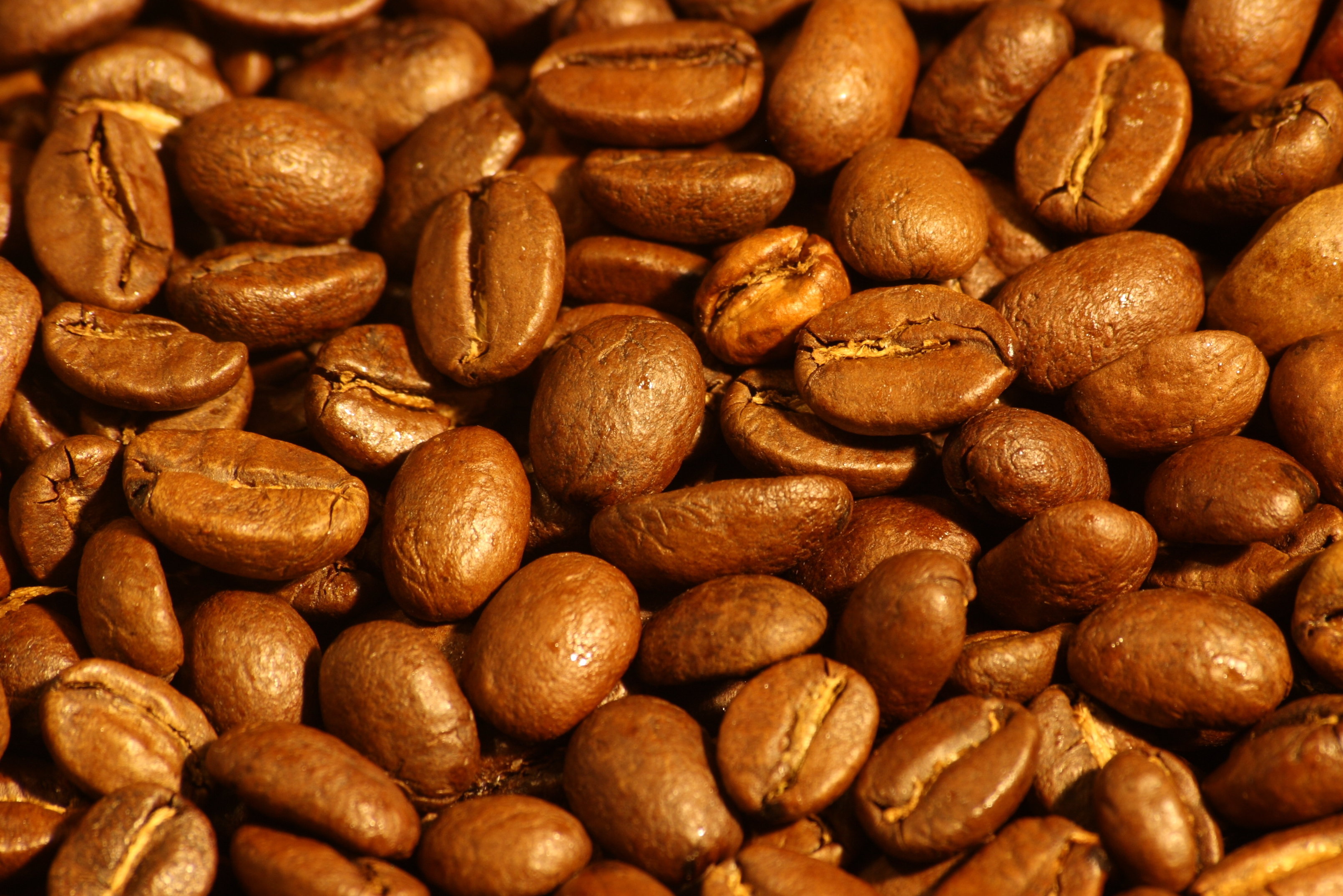 File Medium Roasted Arabica Coffee Beans Jpg Wikimedia