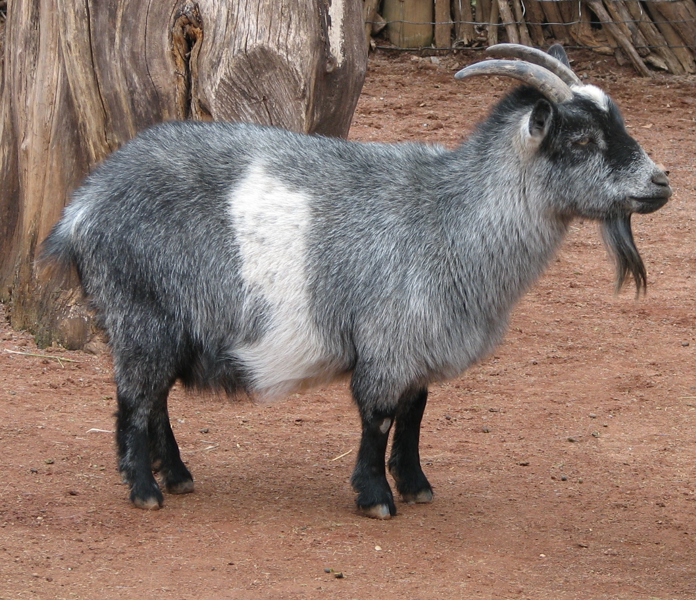 Dwarf On Goat Lord Of The Rings