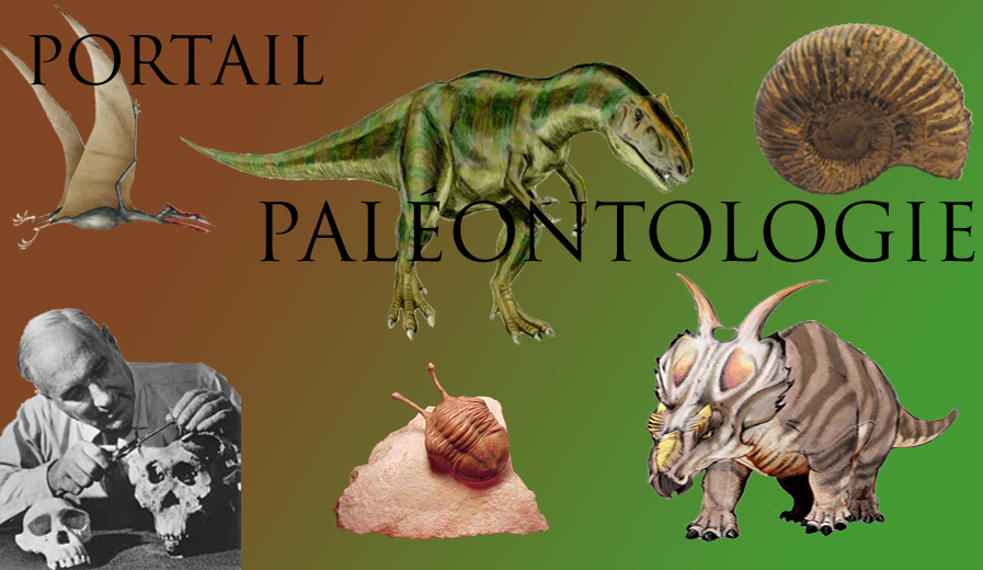 https://upload.wikimedia.org/wikipedia/commons/b/b5/PORTAIL_PALEONTOLOGIE.jpg