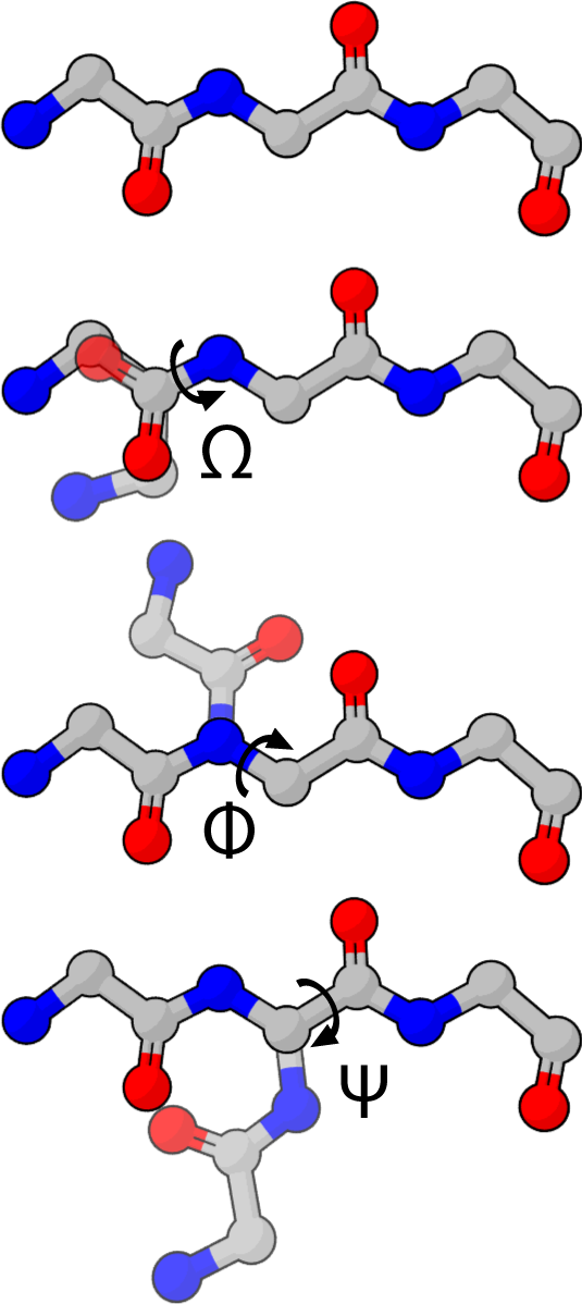 Polypeptide backbone dihedral angles