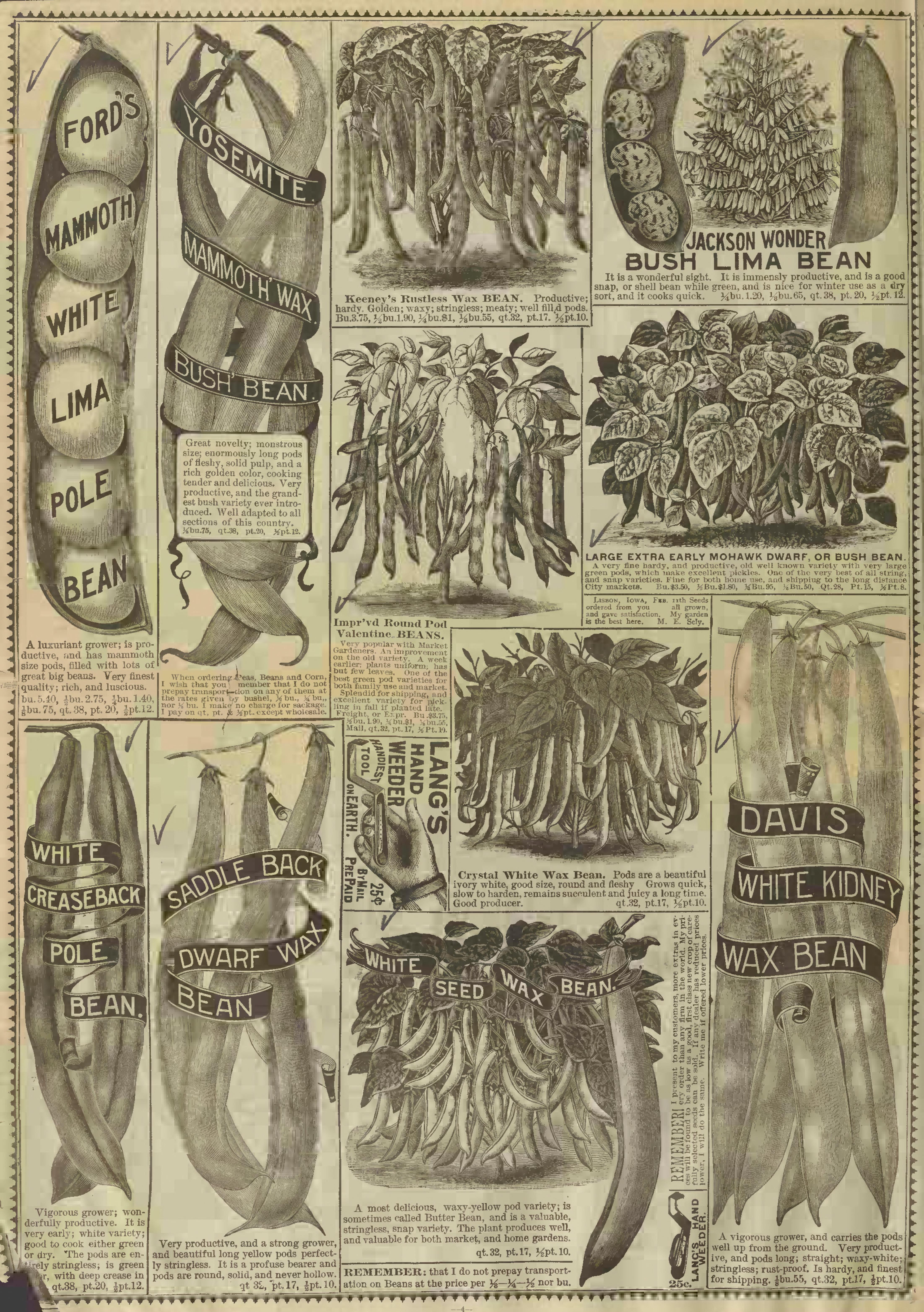 File:R H  Shumway - garden guide (1902) (20575622001) jpg