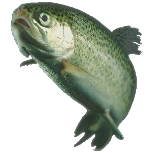 An image of a rainbow trout derived from the p...