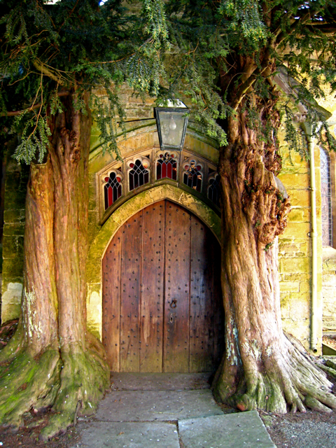 Image result for tree carved doors