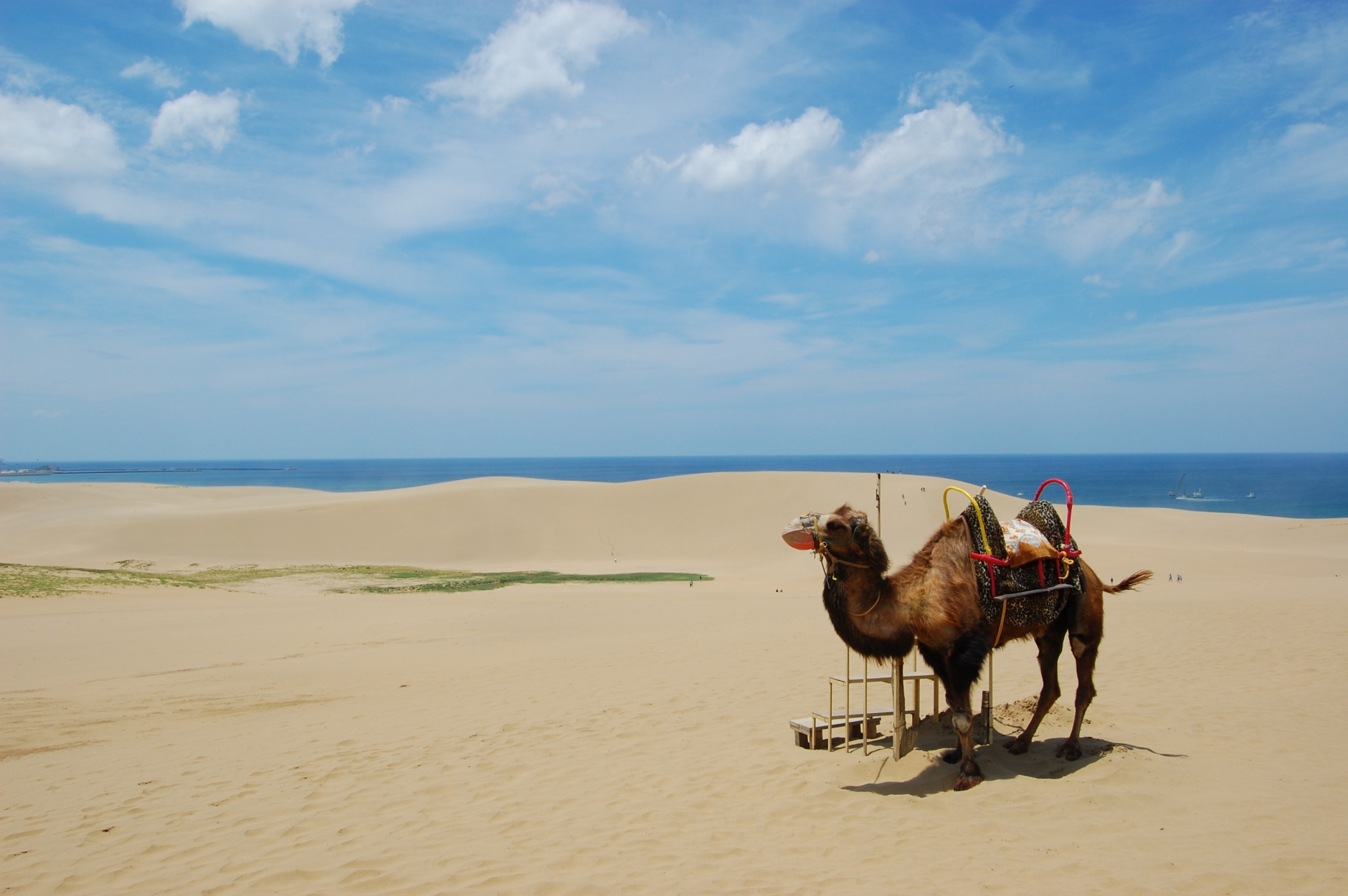 File:Tottori sanddunes camel.jpg - Wikimedia Commons