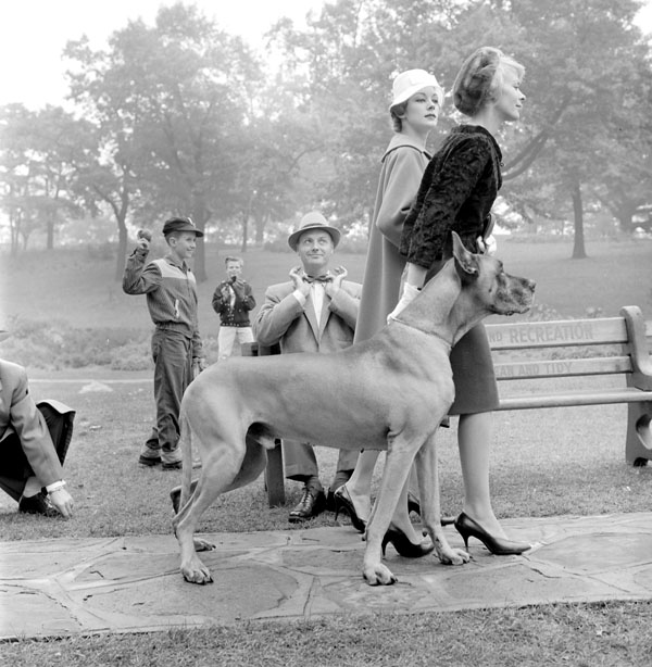 Description Two women walking a great dane in High Park in Toronto.jpg