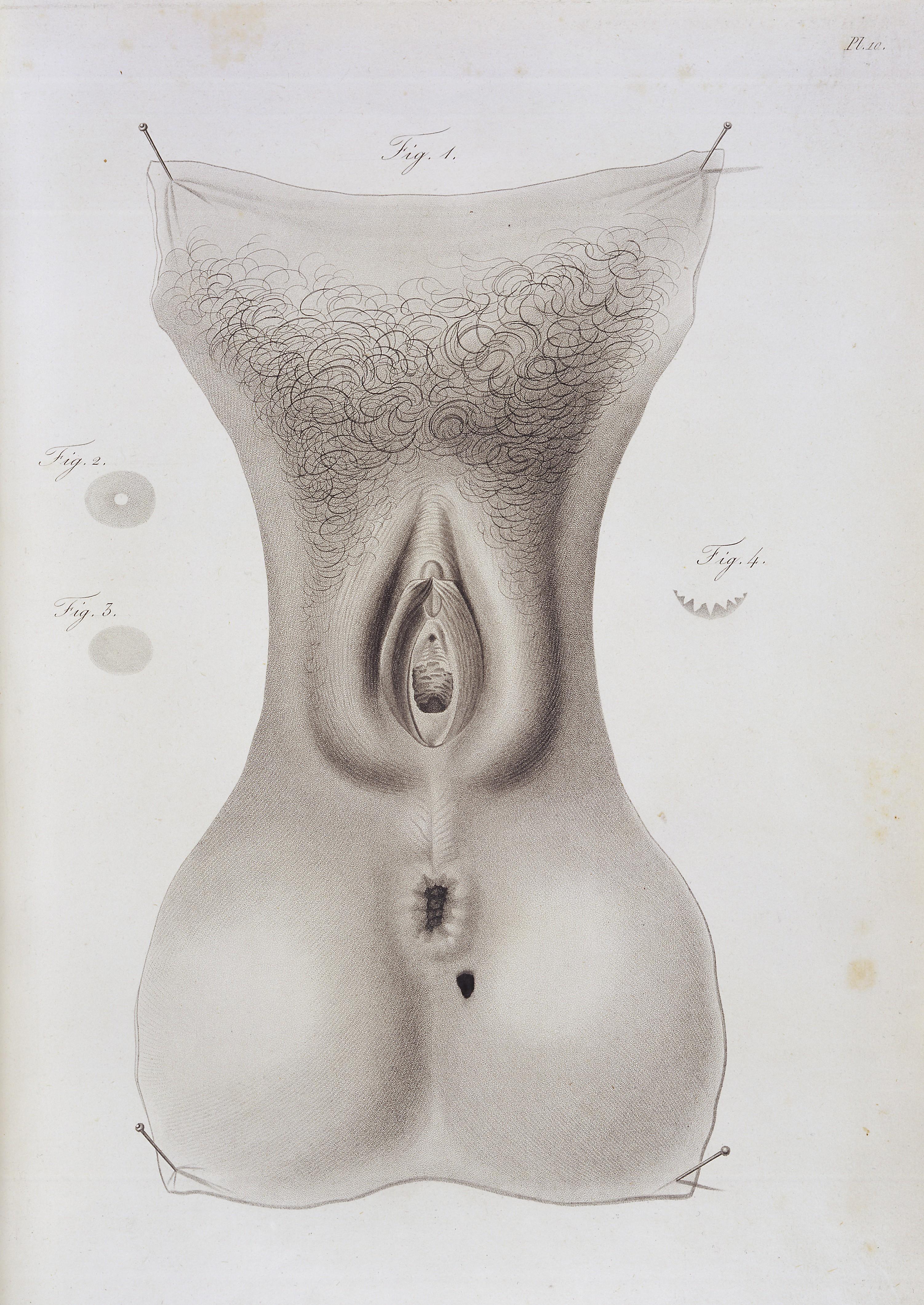 Genital Art