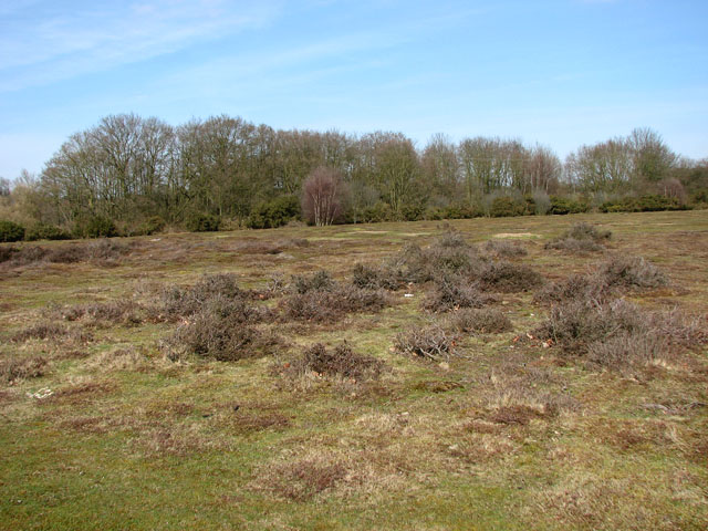 View across Wortham Ling - geograph.org.uk - 1770269