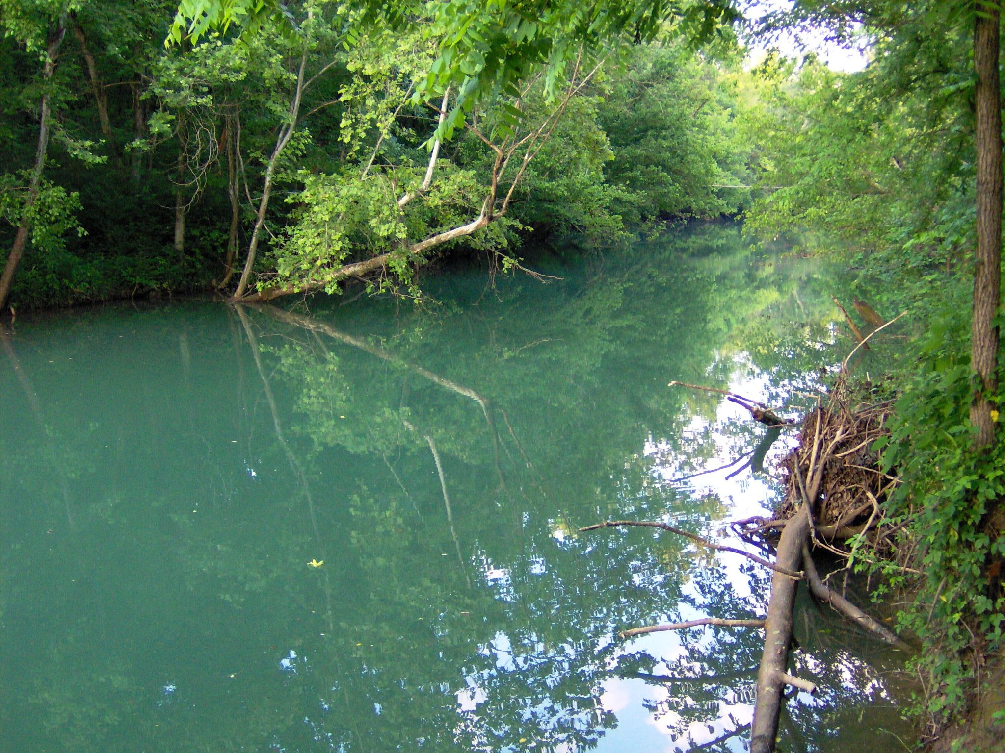 Wolf River - Pall Mall, TN - Bowling Green Canoe and Kayak ...