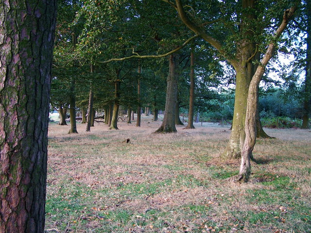 Woodland - geograph.org.uk - 250596