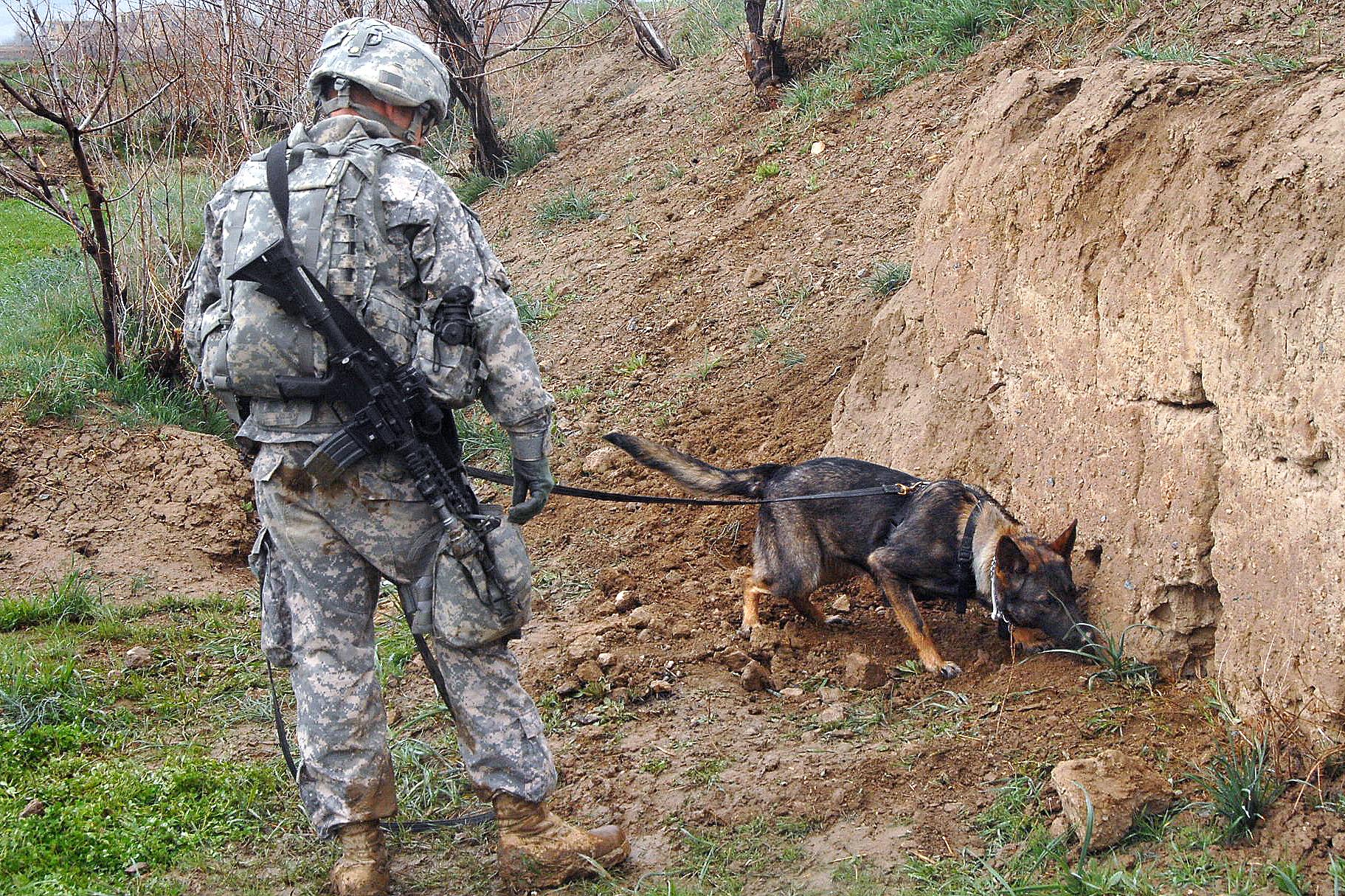 Image Result For Ptsd Dog Training
