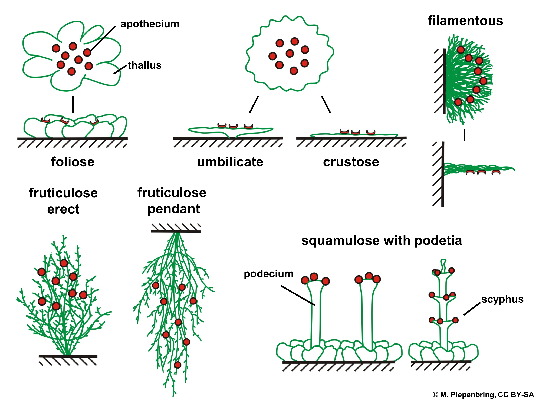 Lichen growth dating