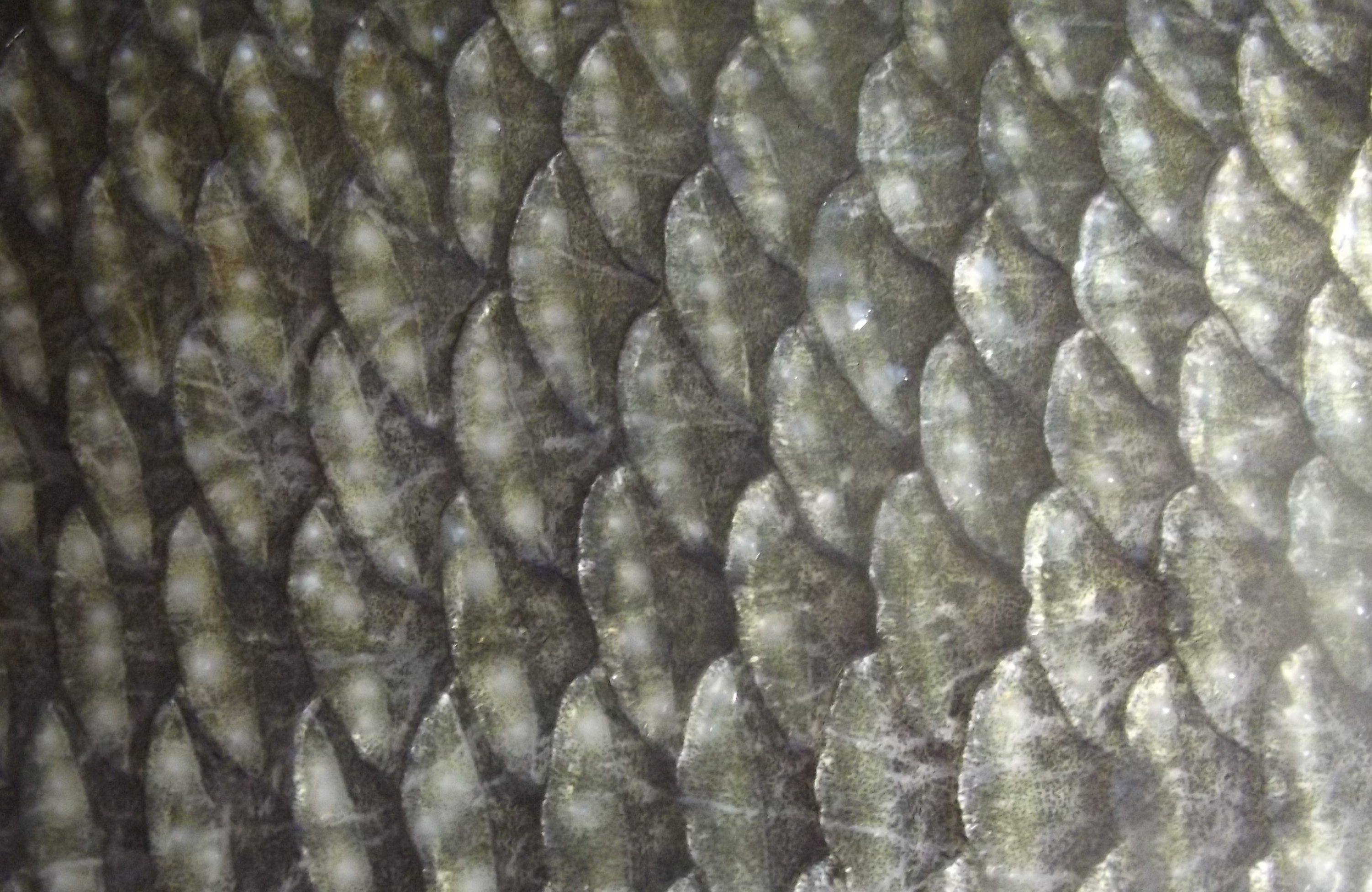 Fish scales for Mlf fishing scale