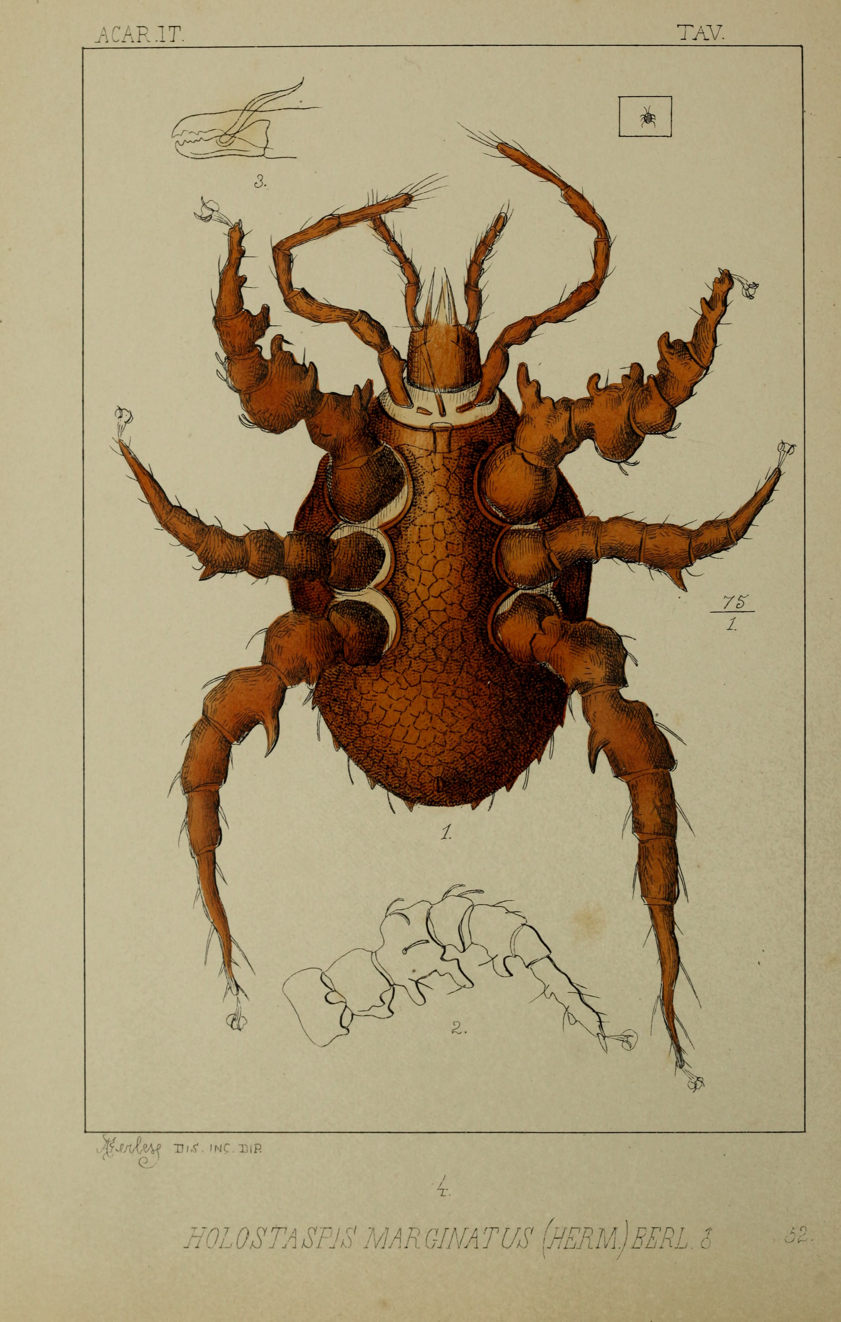 file acari myriopoda et scorpiones hucusque in italia reperta 1889