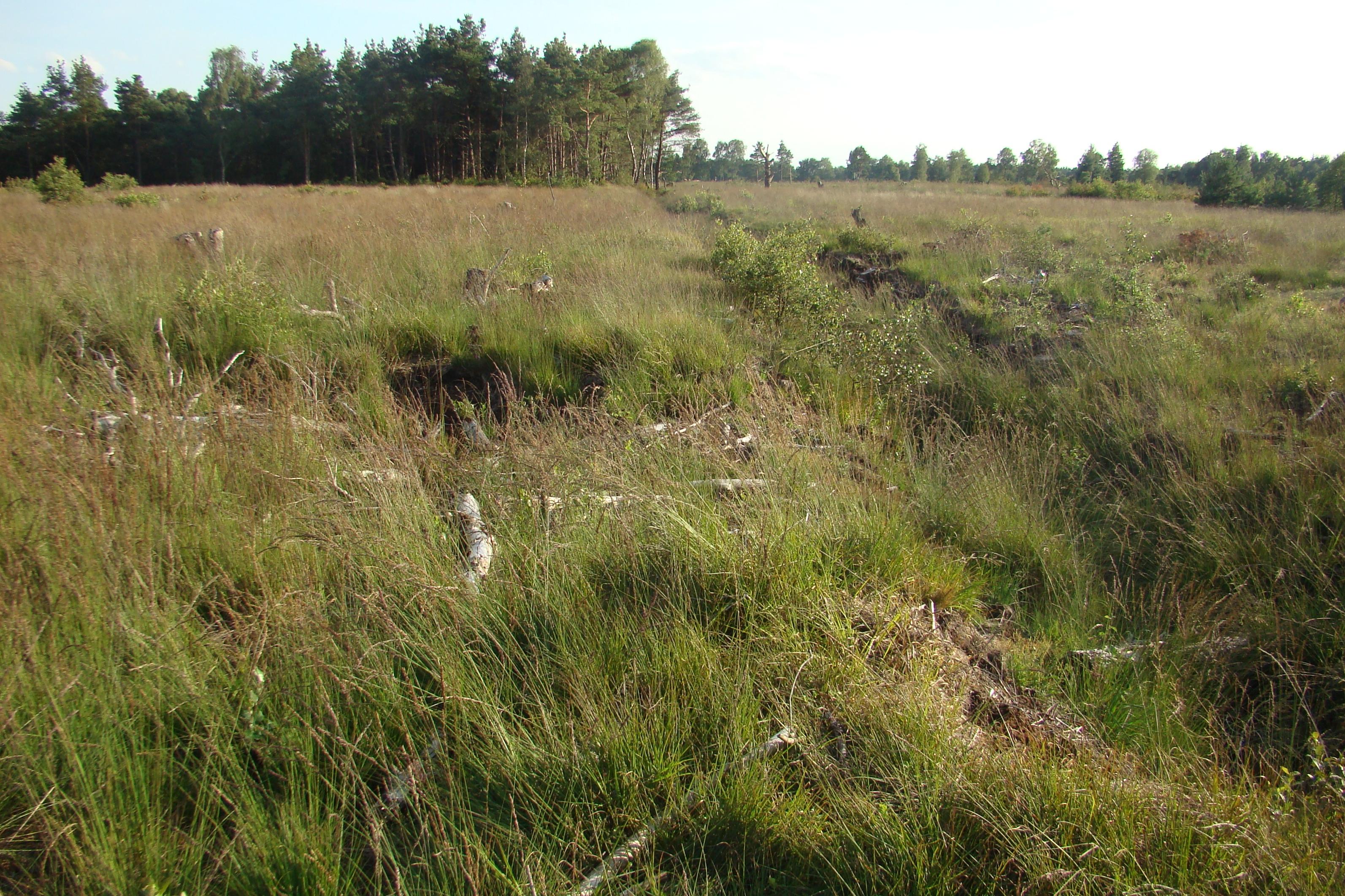 Großes Moor bei Becklingen