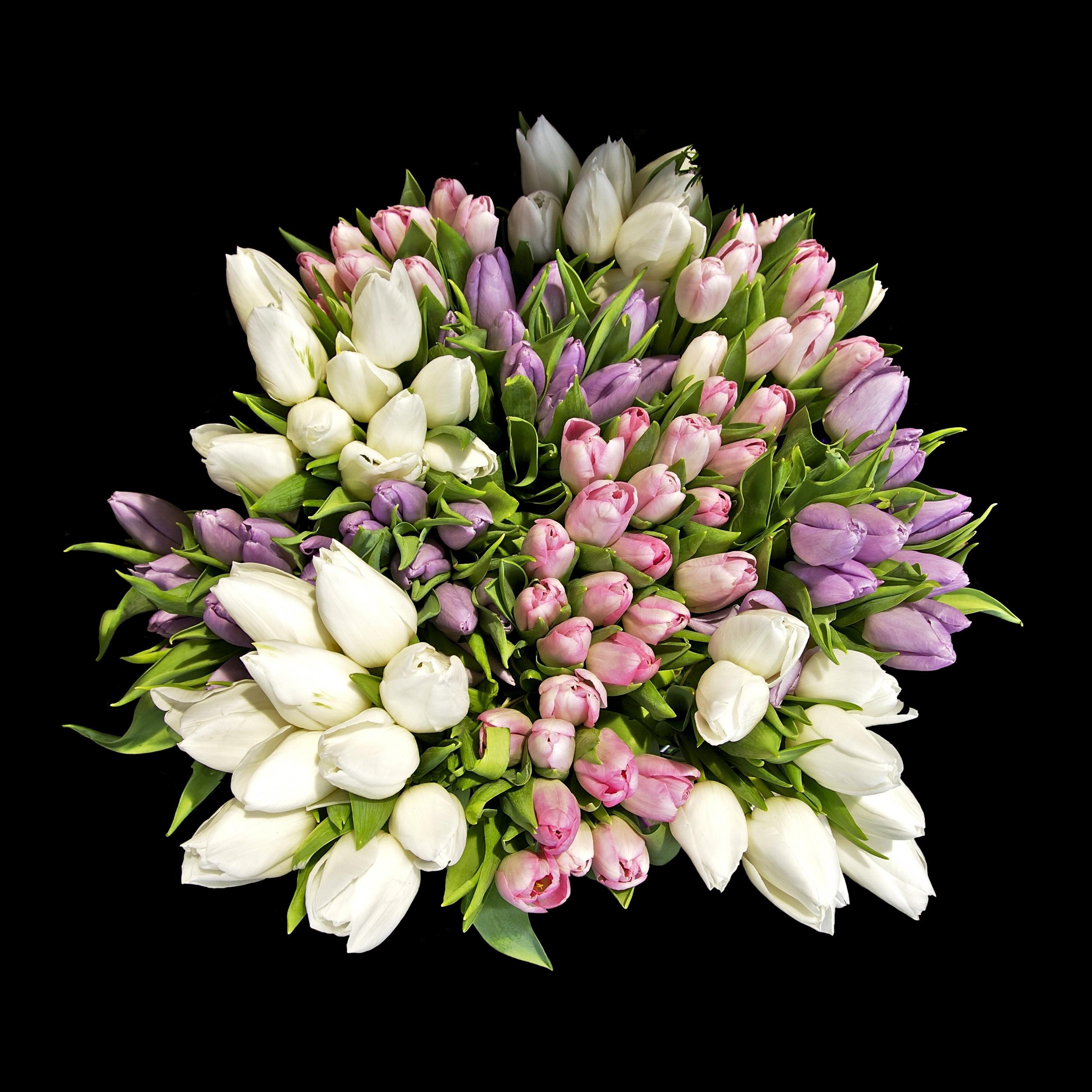 tulips for wedding