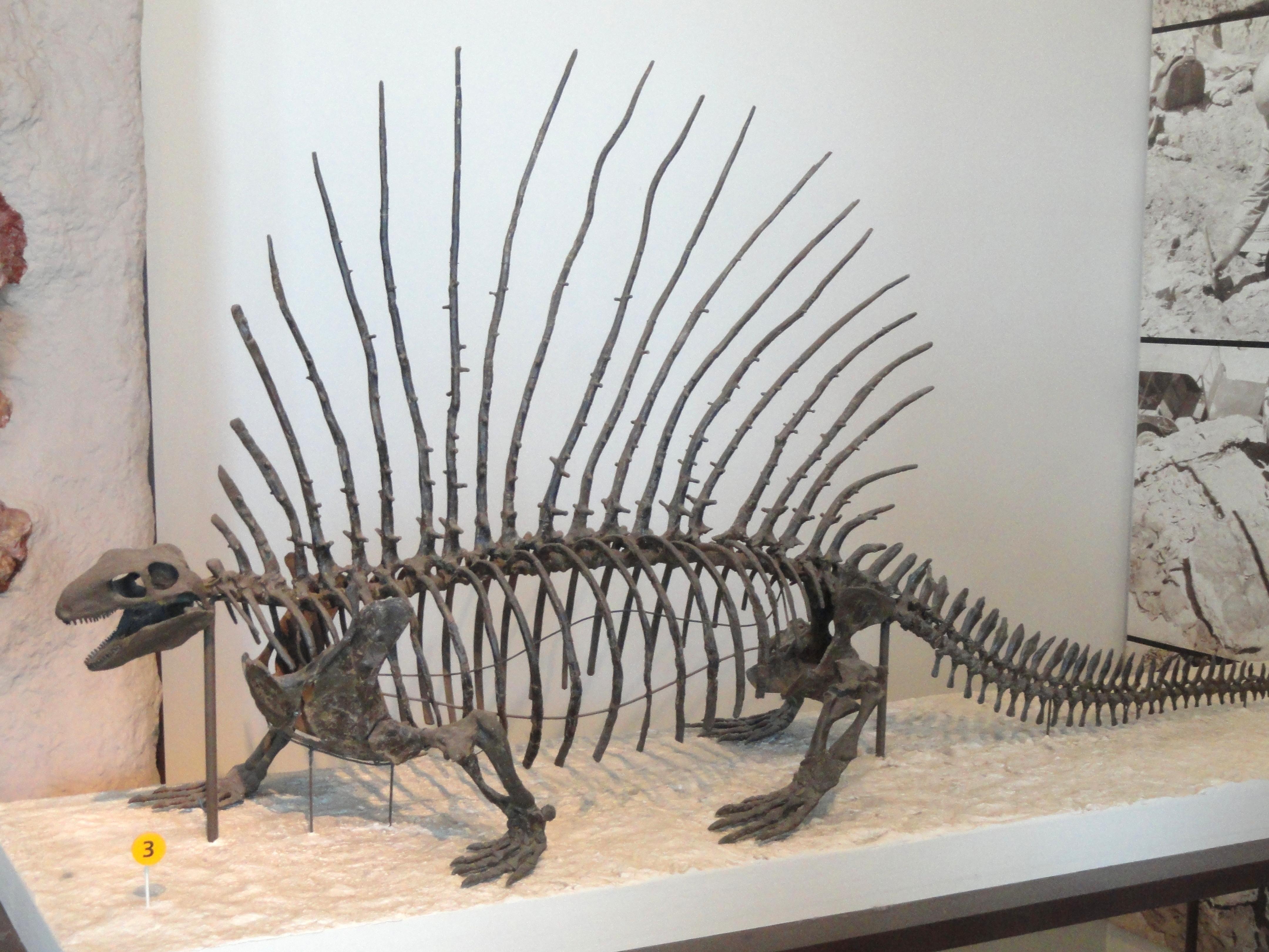 dimetrodon steckbrief