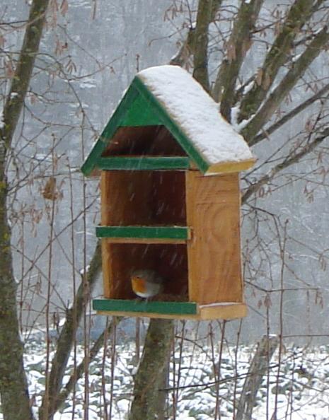 Erithacus rubecula neige