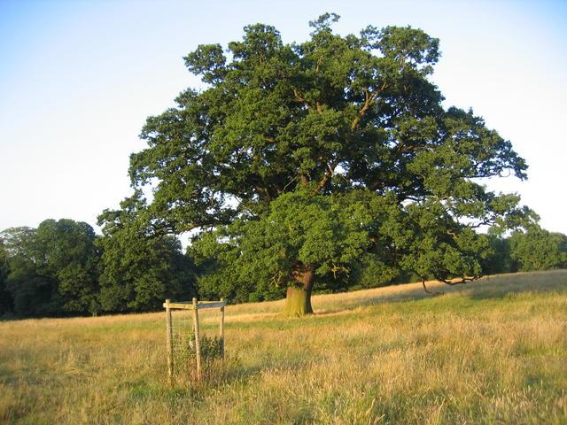 File:Farnborough Park - geograph.org.uk - 201507.jpg