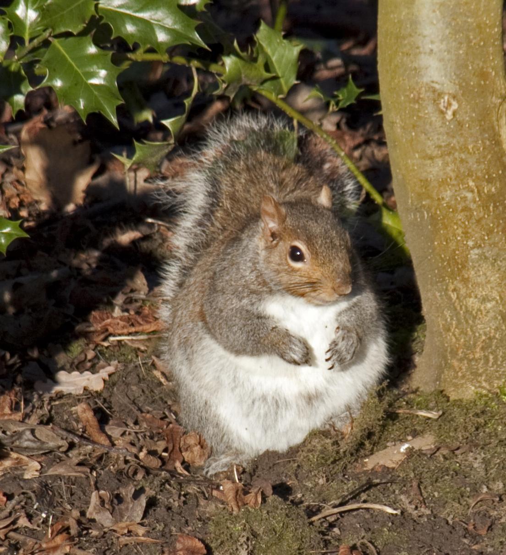 A Fat Squirrel 4