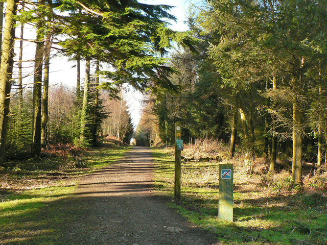Forestry walk, Hensol Forest - geograph.org.uk - 1156857