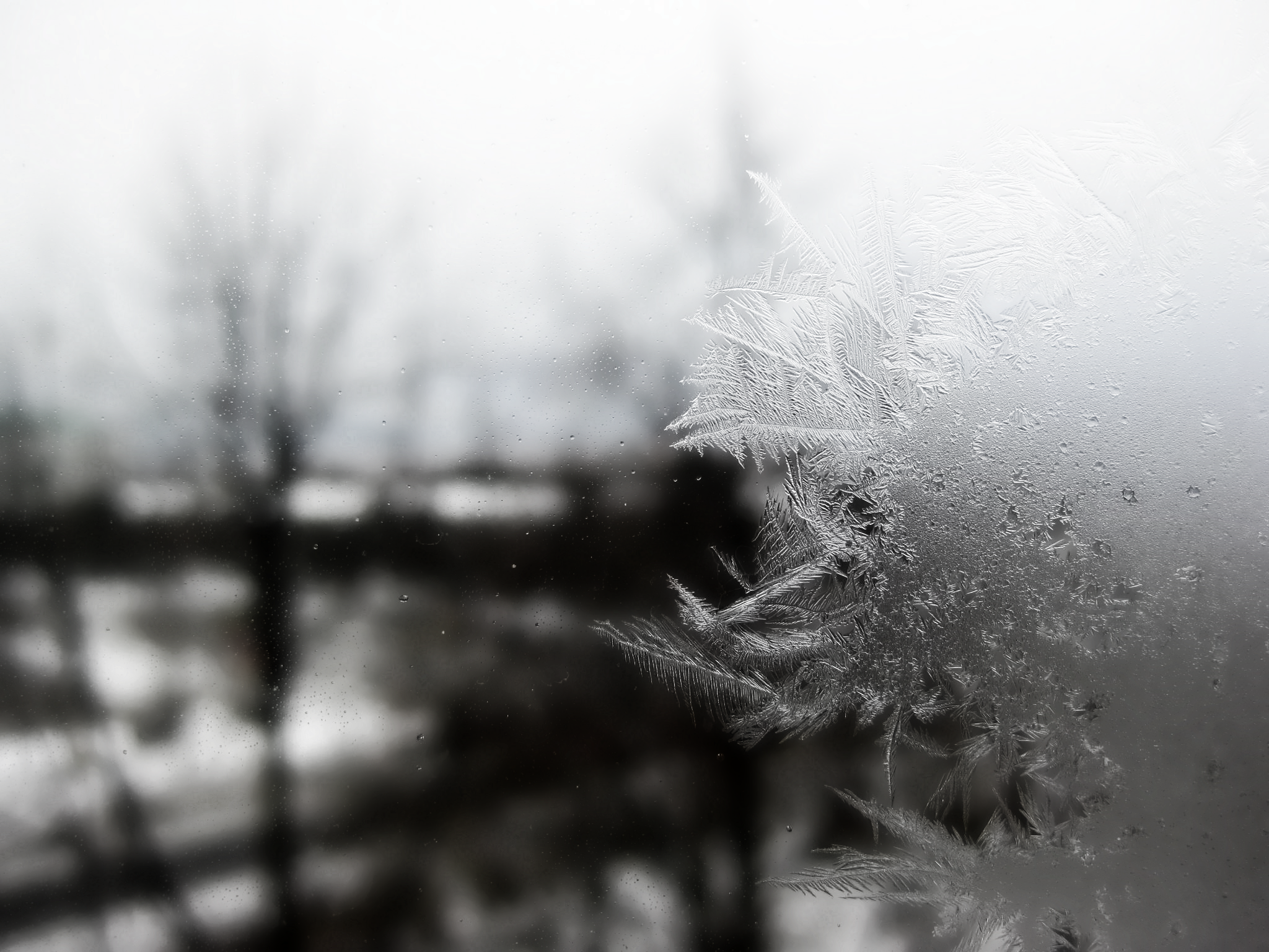 File:frosted Window.png