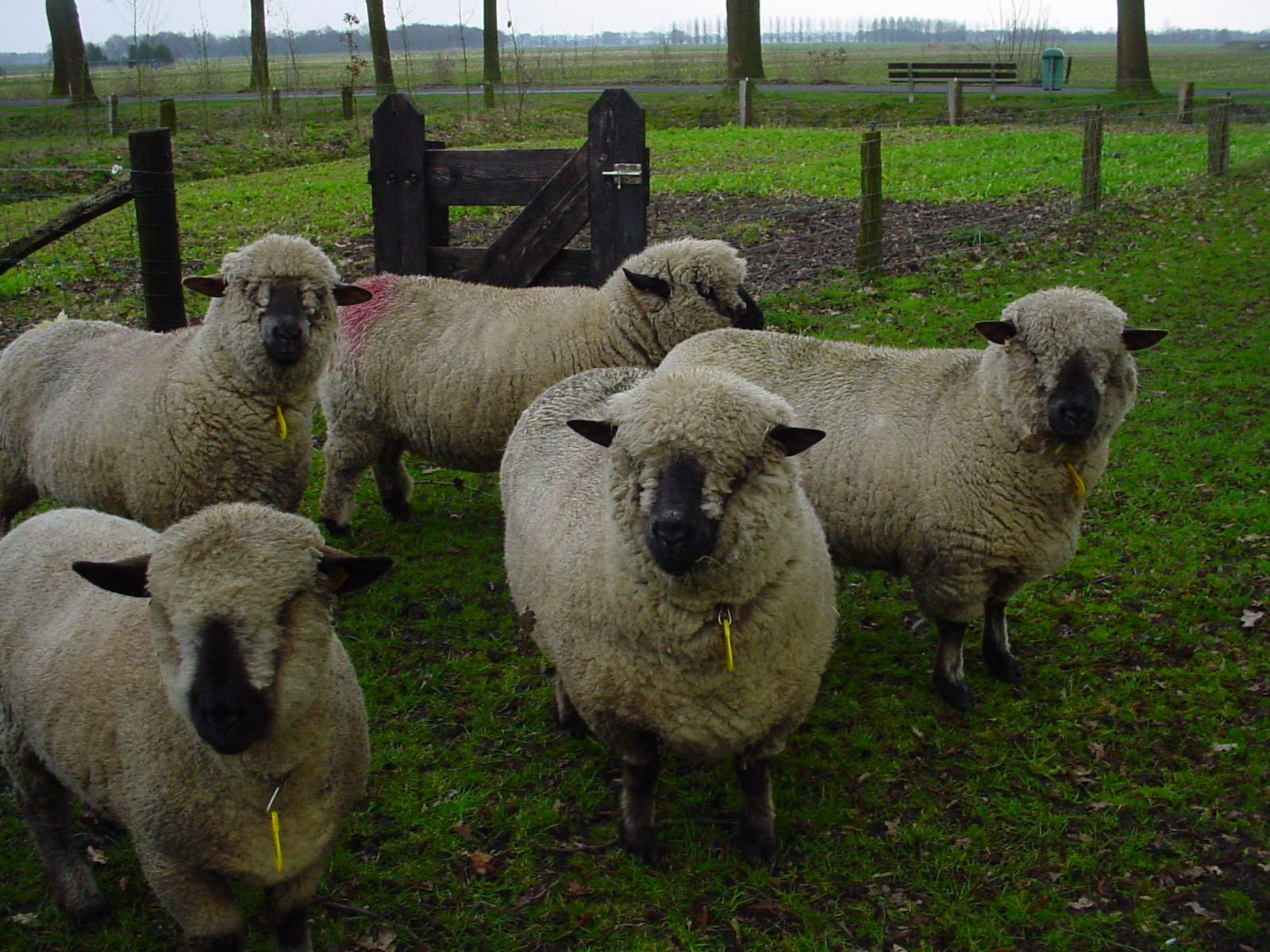 meat product quality from different sheep breeds Quality of breeds in western balkan and norway achieving improved palatability,  cured products from sheep meat in bih  sheep meat quality of meat from different.