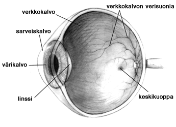 Venäjä Etymologia