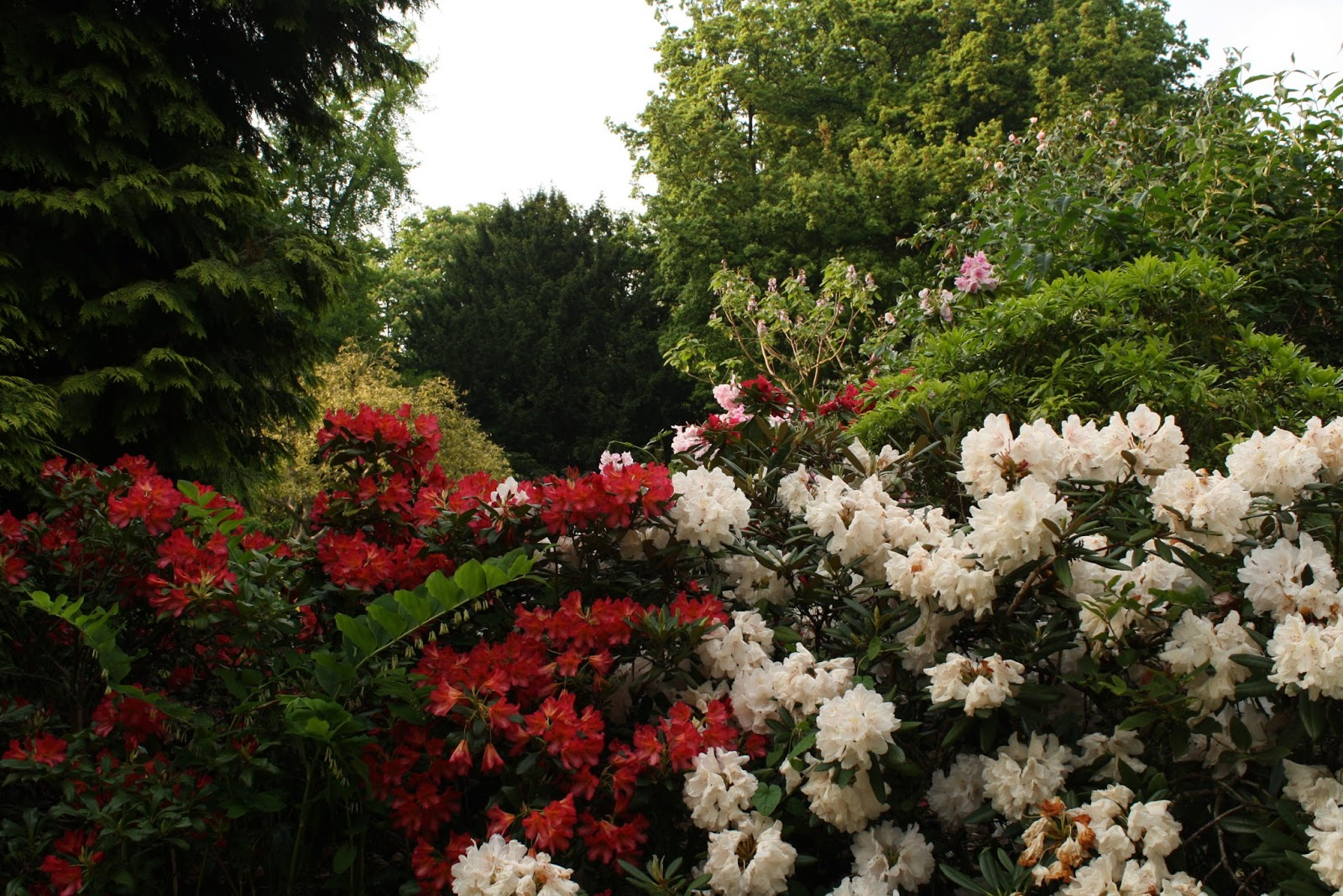 Garden Walk London: File:Kensington Gardens (The Flower Walk), London.JPG