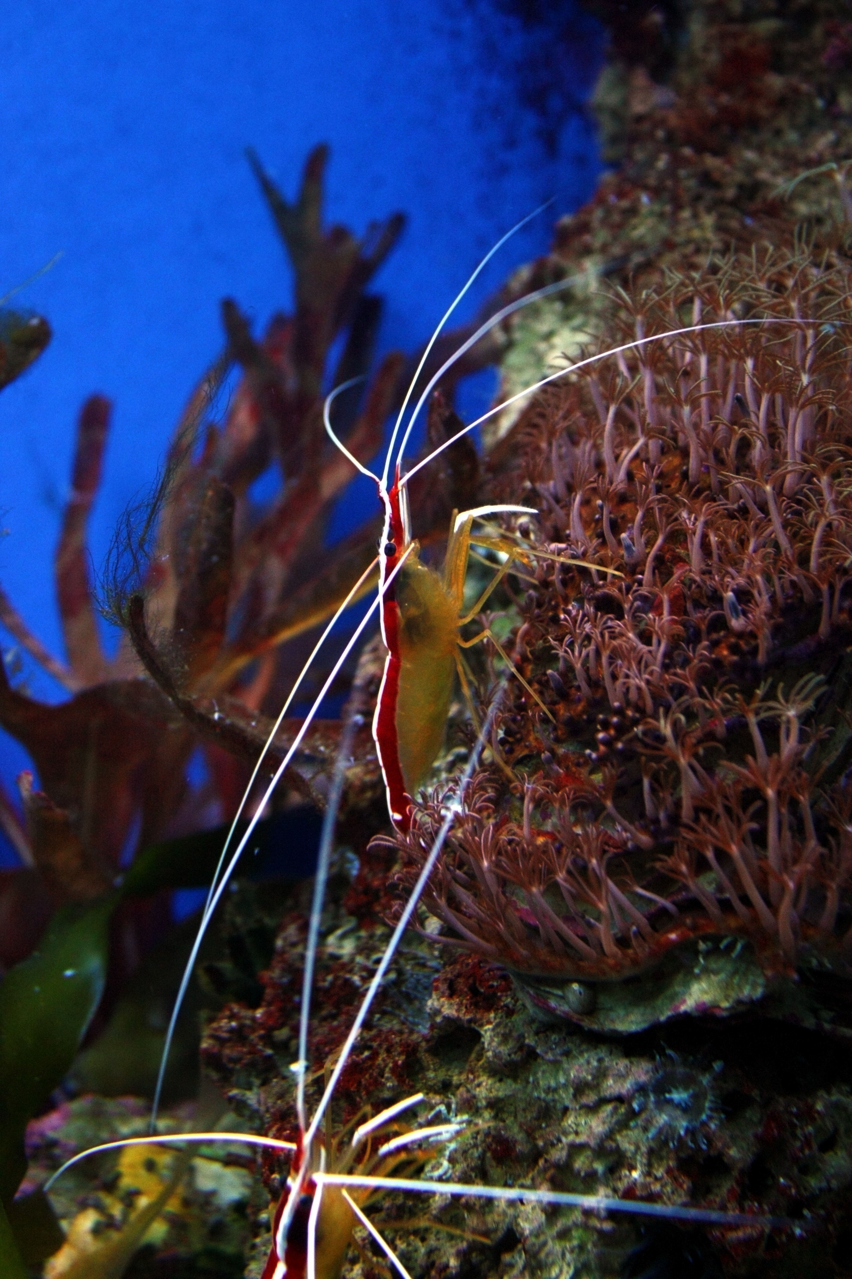 Image Result For Aquarium Li