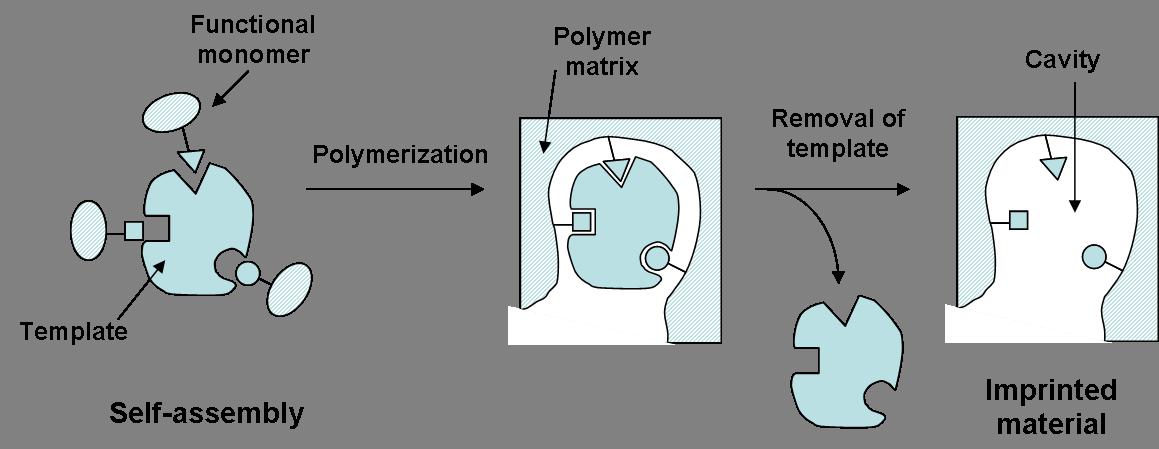 molecular imprinting wikipedia