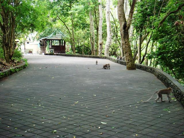 File:Monkey Forest, Ubud, Bali.JPG