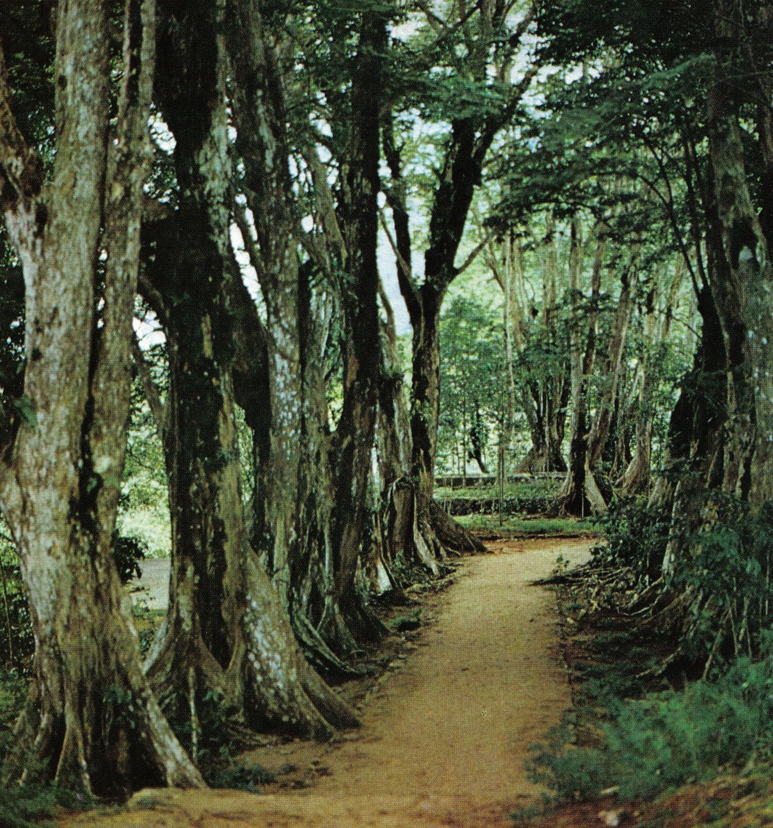 Footpath at the Morne Seychellois National Park, Seychelles