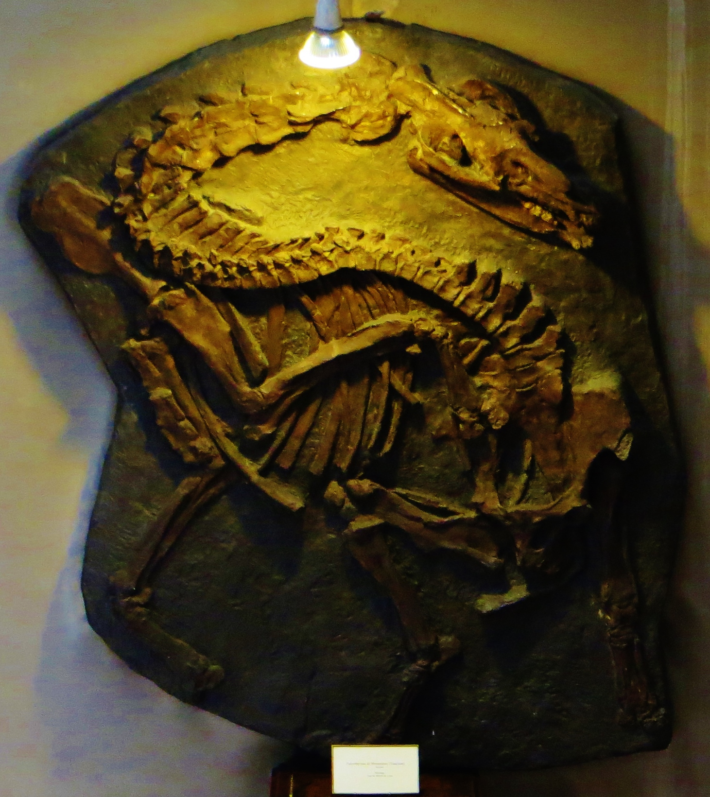 an introduction to the history of marine fossils Introduction & history introduction & history of fossil fish the upper part of the near shore shale may contain marine invertebrate fossils such as.