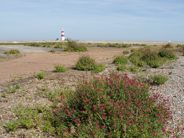 Plant life on Orford Ness - geograph.org.uk - 1457131