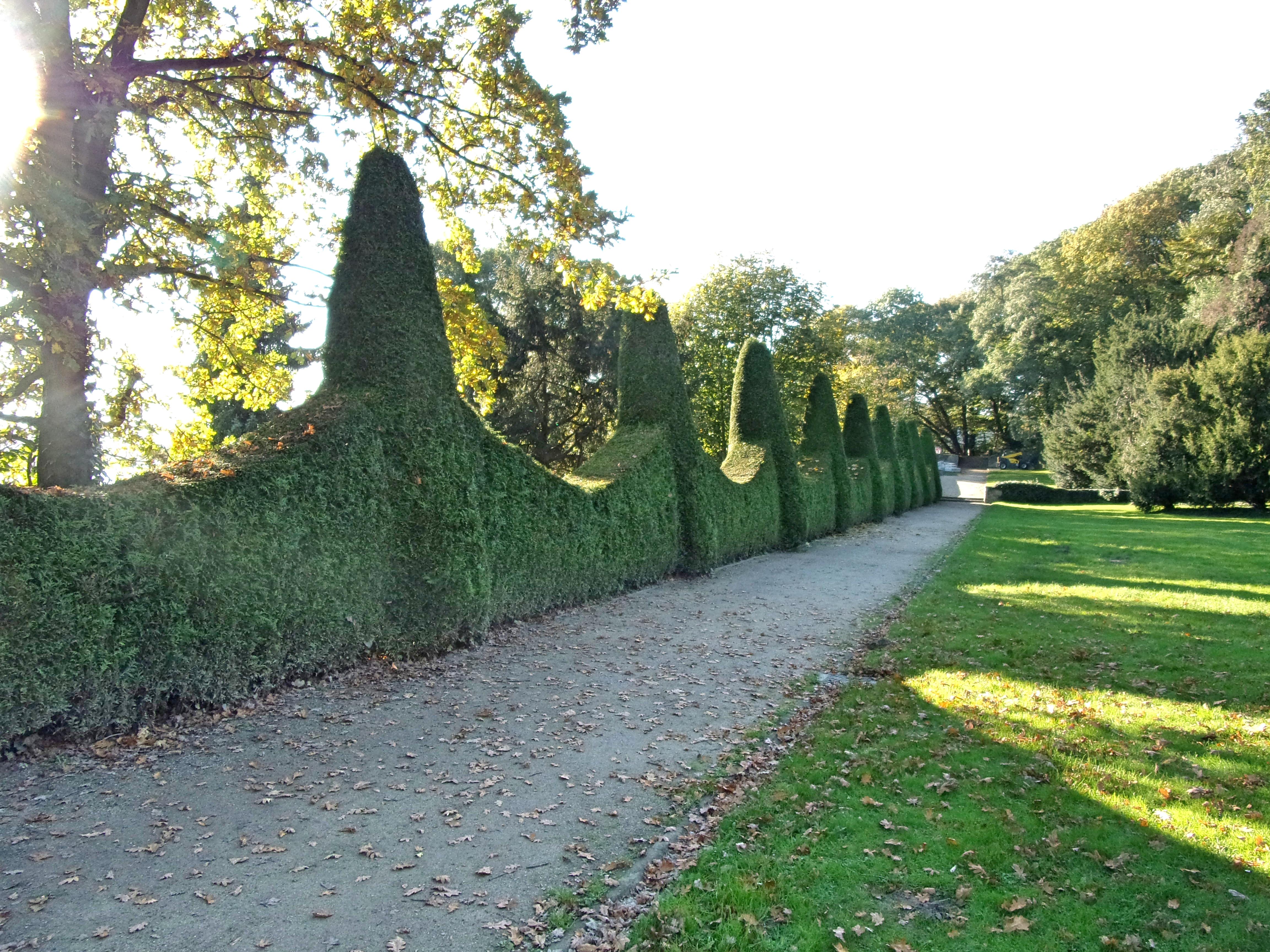 File Romischer Garten Thuja Hecke 1 Jpg Wikimedia Commons