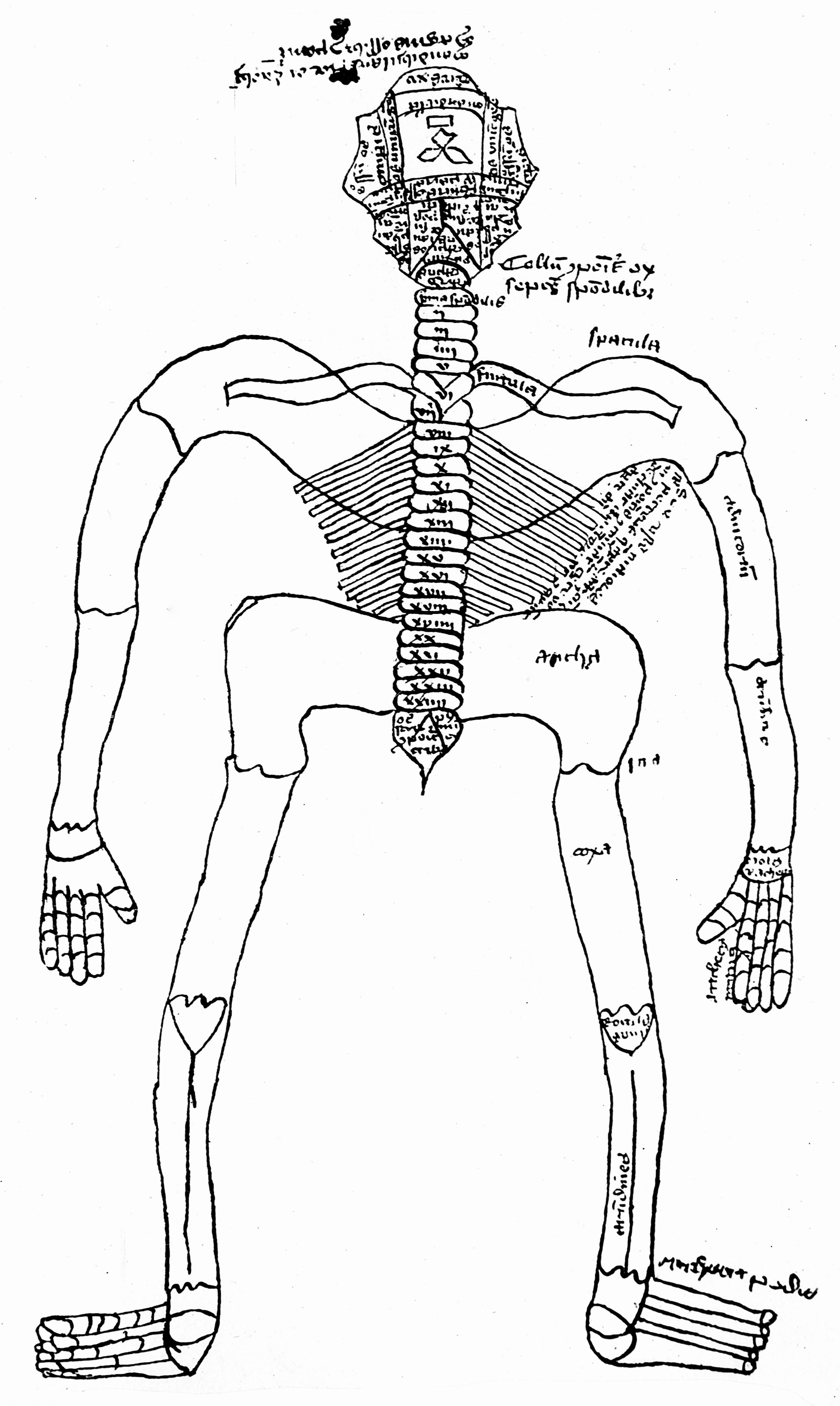 Fileskeleton 14th Century Wellcome M0000410g Wikimedia Commons